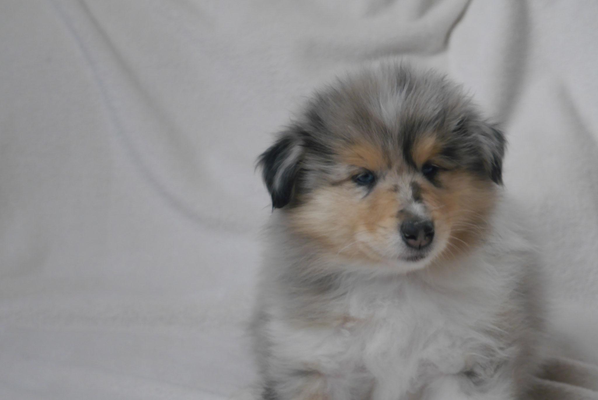 Buster mit 7 Wochen