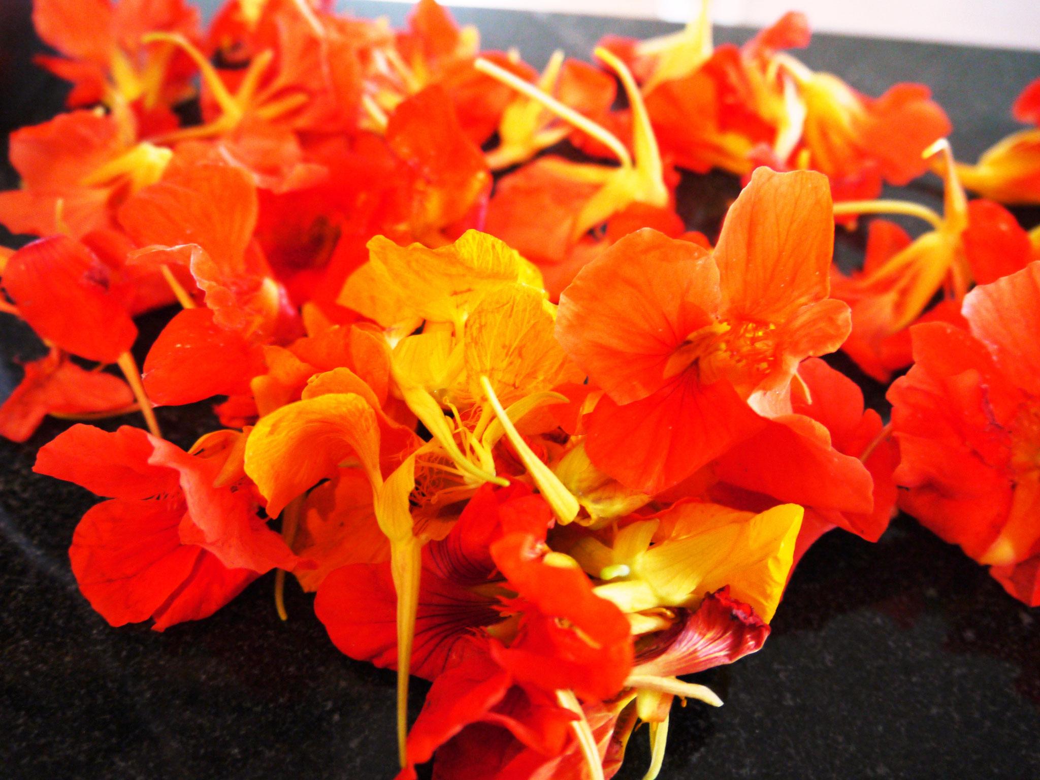 Blüten, Blätter und Knospen kannst du von der Kapuzinerkresse essen. Alles! :)