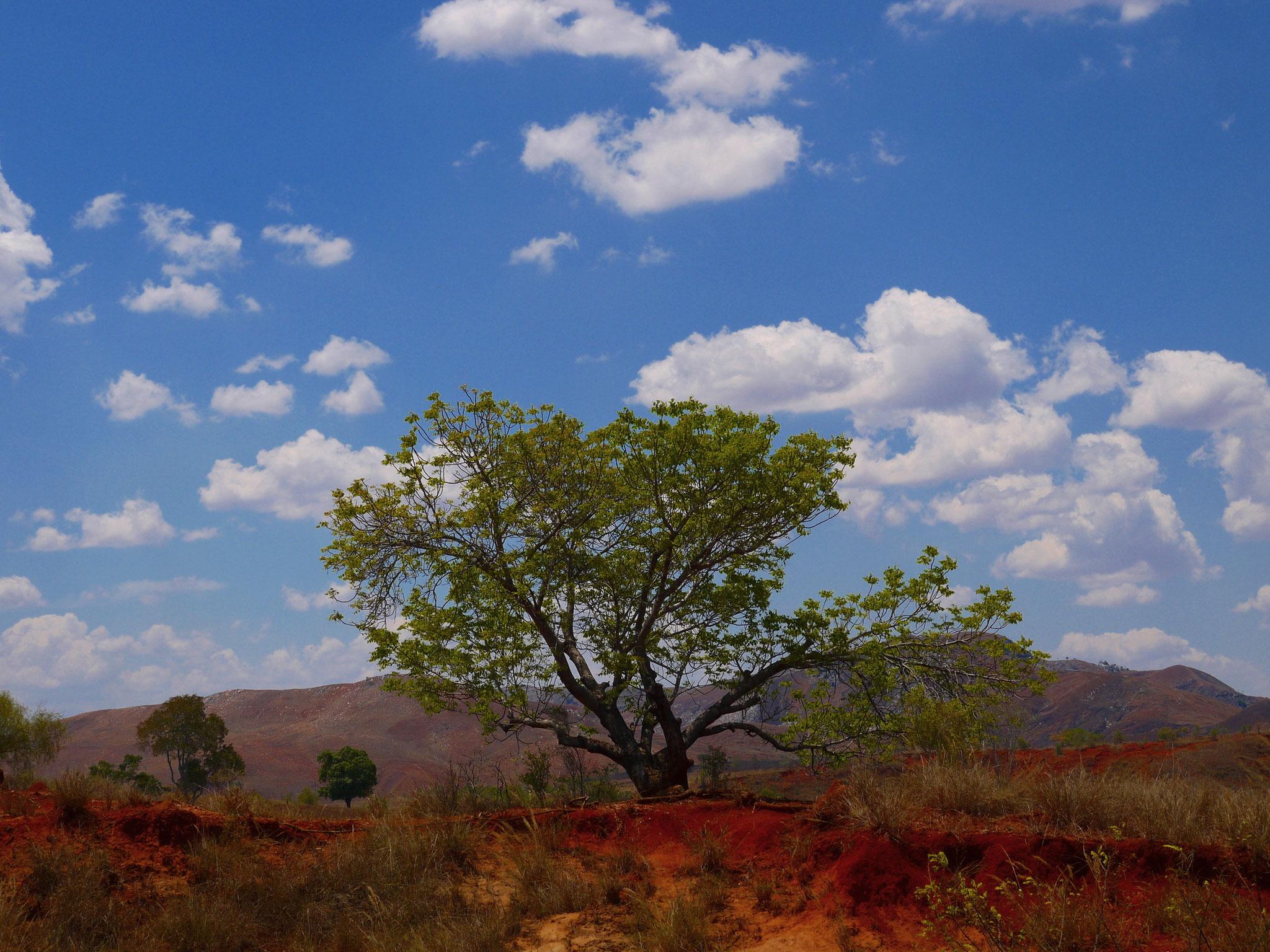 Wunderschöne Landschaft und kräftige Farben beeindrucken.