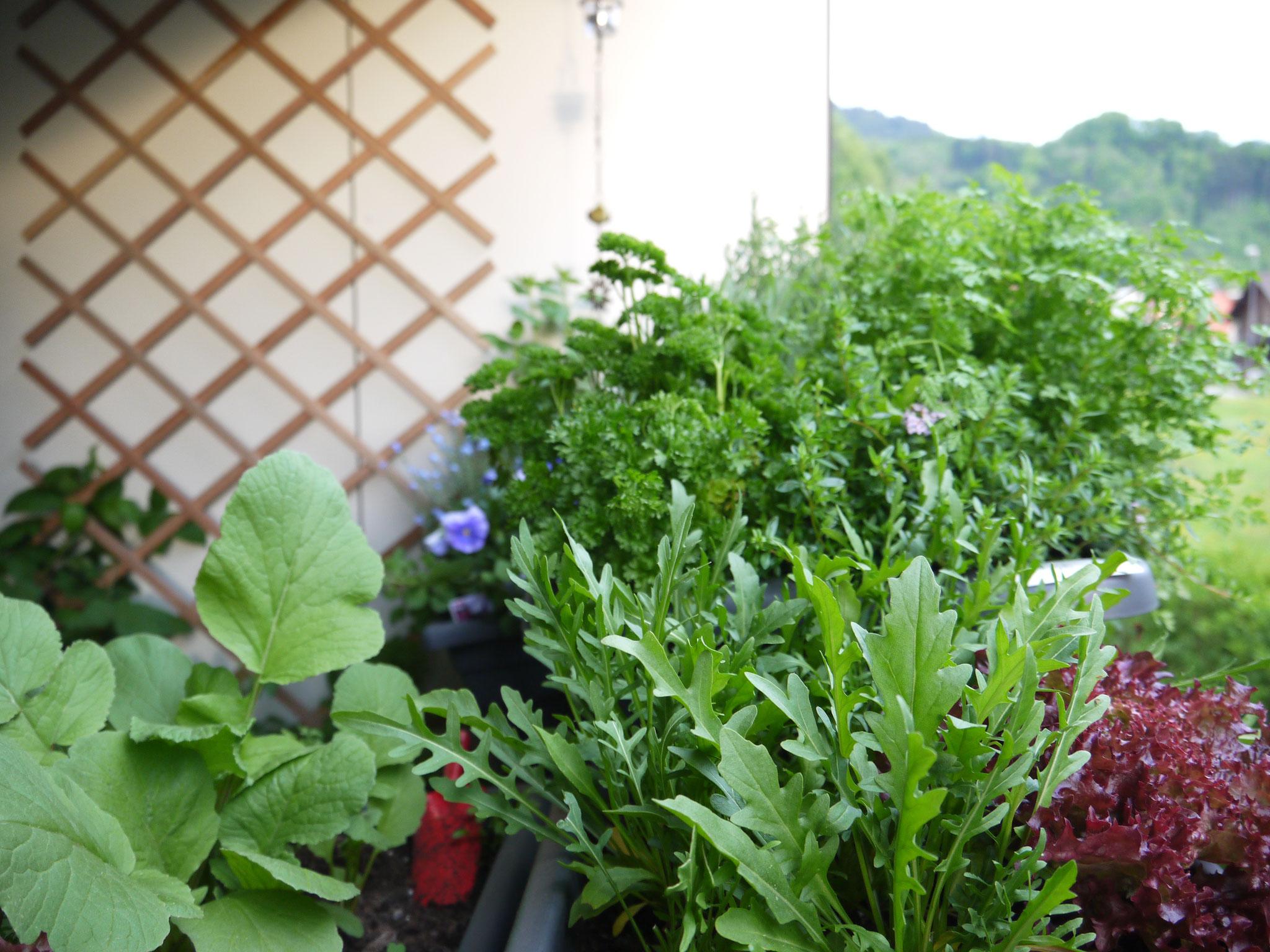 Kräuter und Gemüse selbst anpflanzen geht auch auf Fensterbank und Balkon.