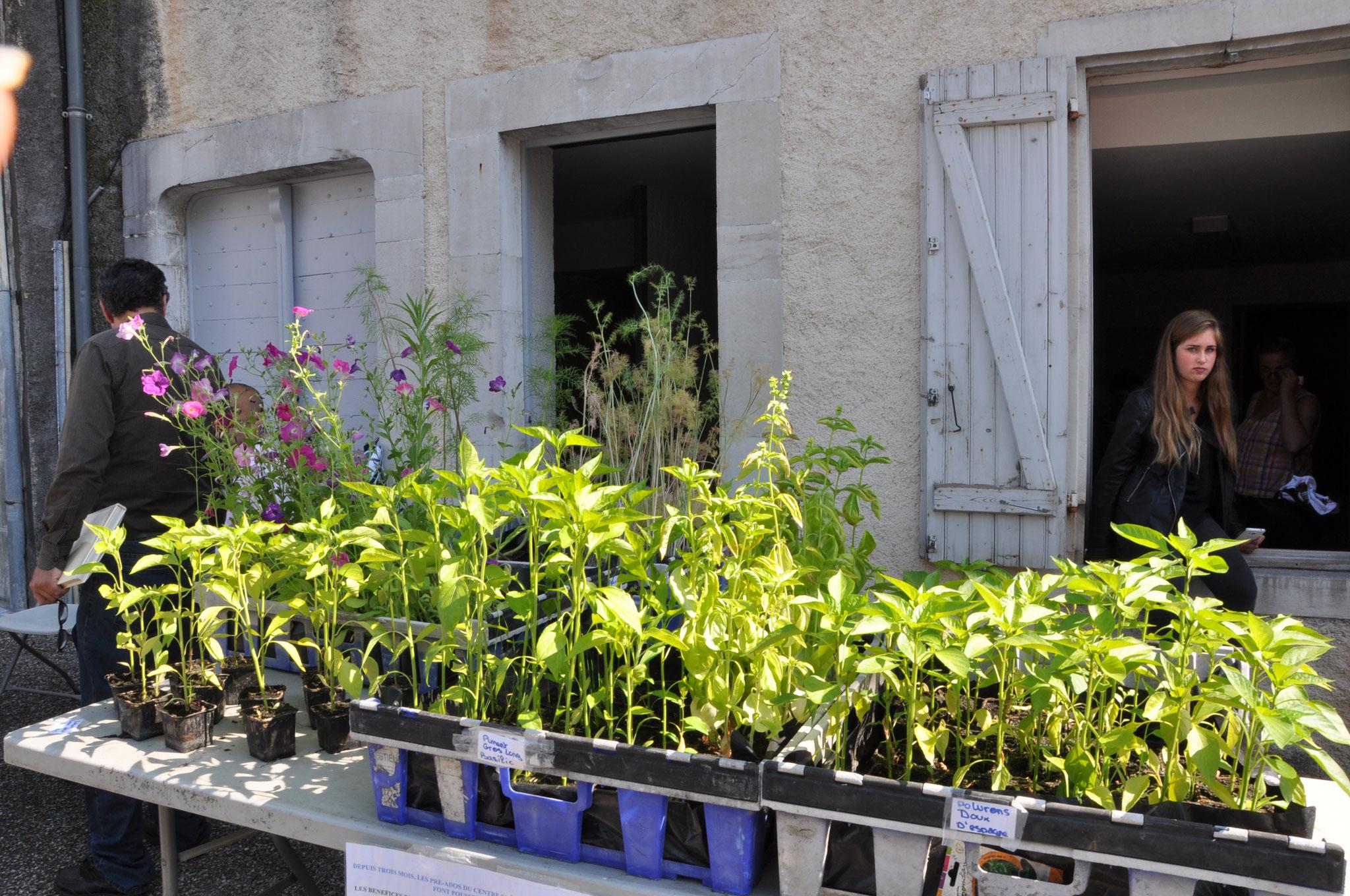 Les plants vendus par les jeunes du Centre Social