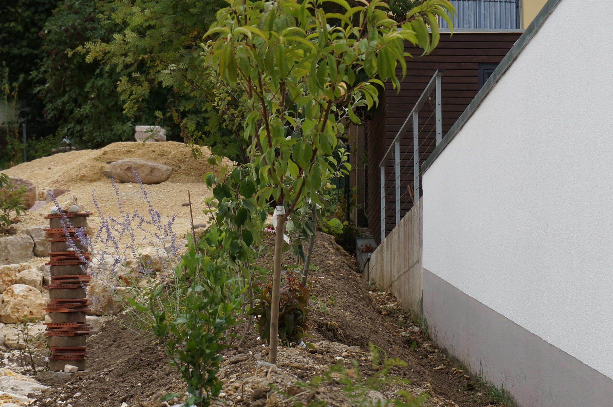 frisch angepflanzt - ganz rechts zur Garage werden Himbeeren gepflanzt