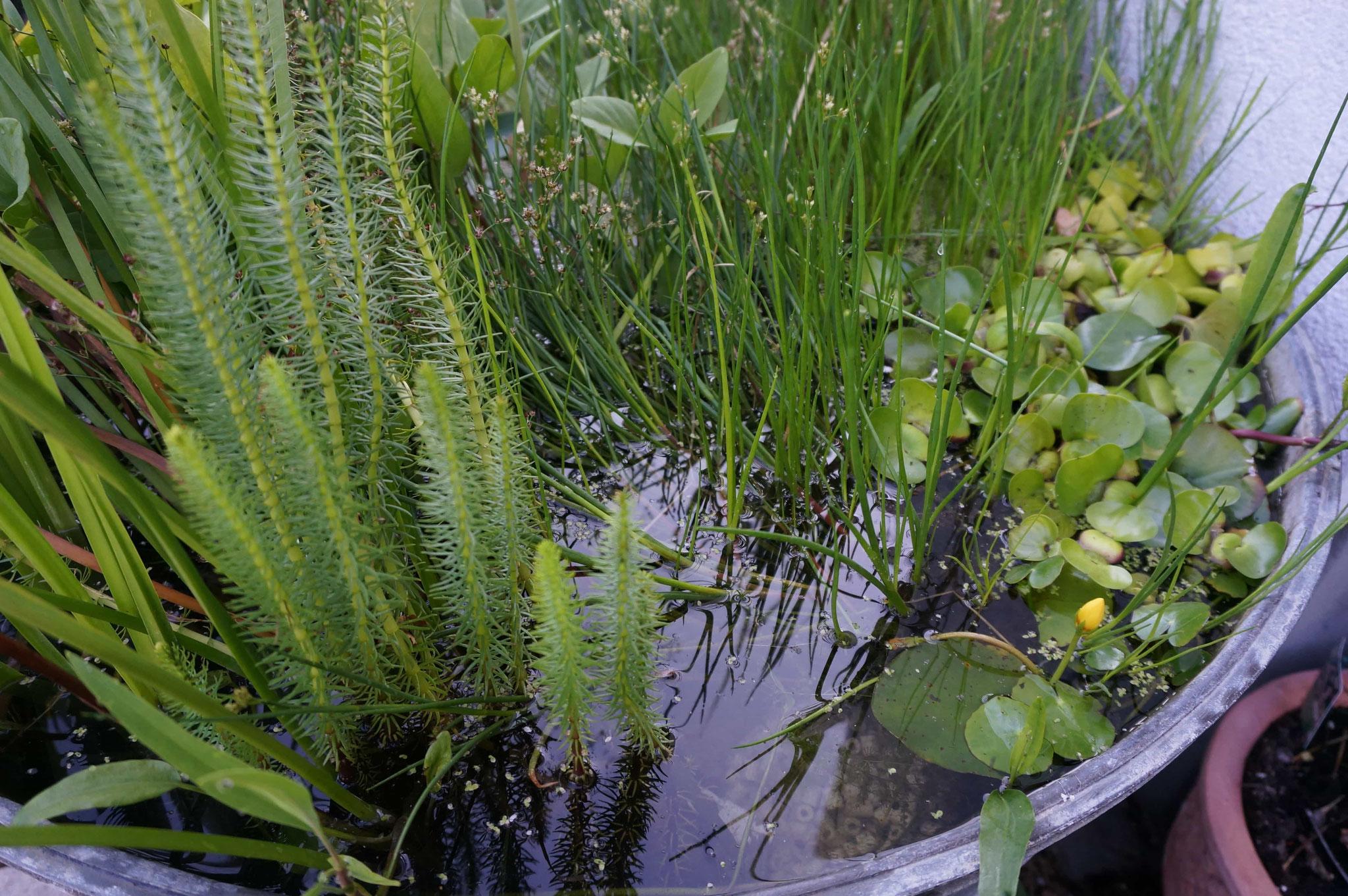 Wasser im Vorgarten