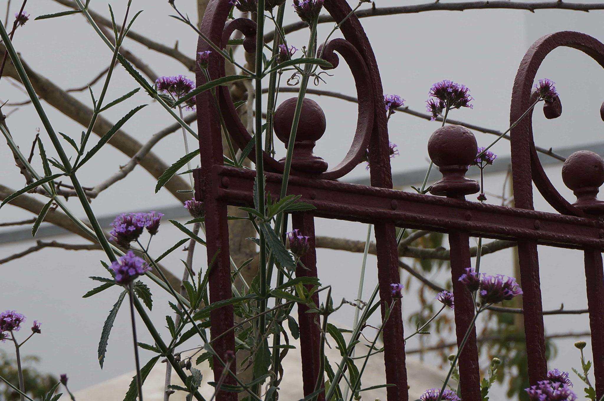 Naturmodul - Zaunelement als Rankhilfe