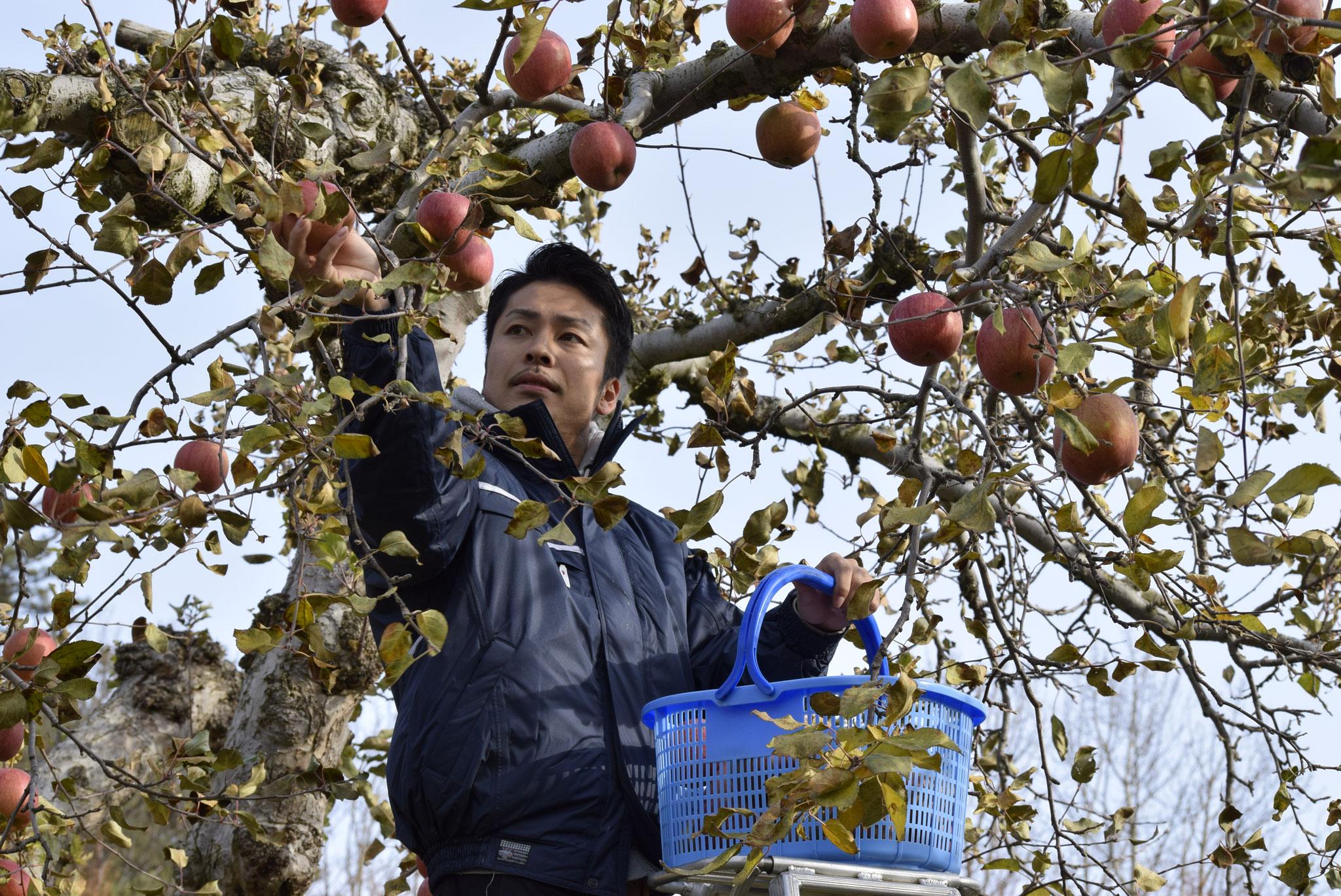 宮西農園りんご