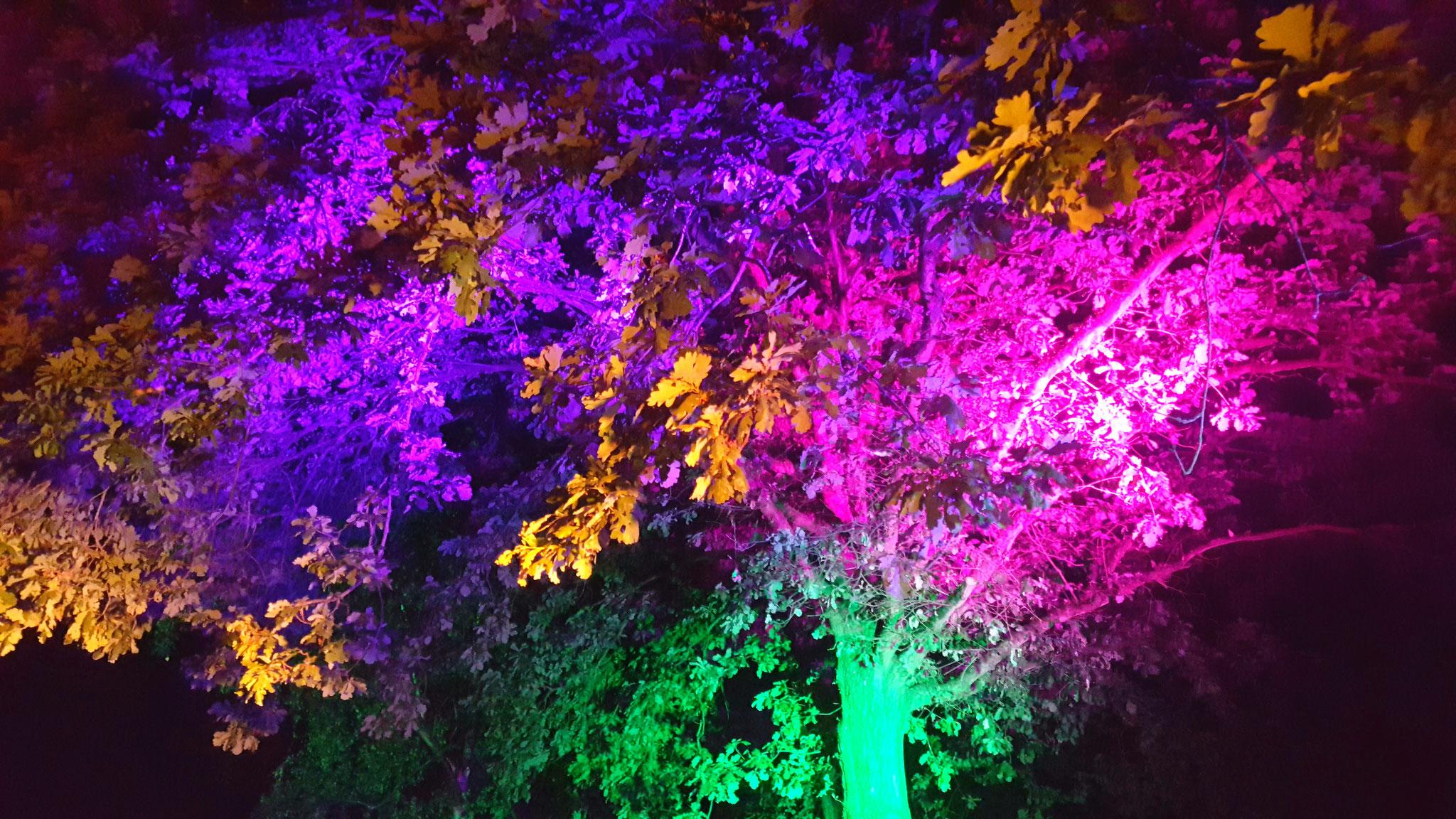Lichttechnik mieten in Bonn. Hier beleuchten LED Scheinwerfer Baumkronen