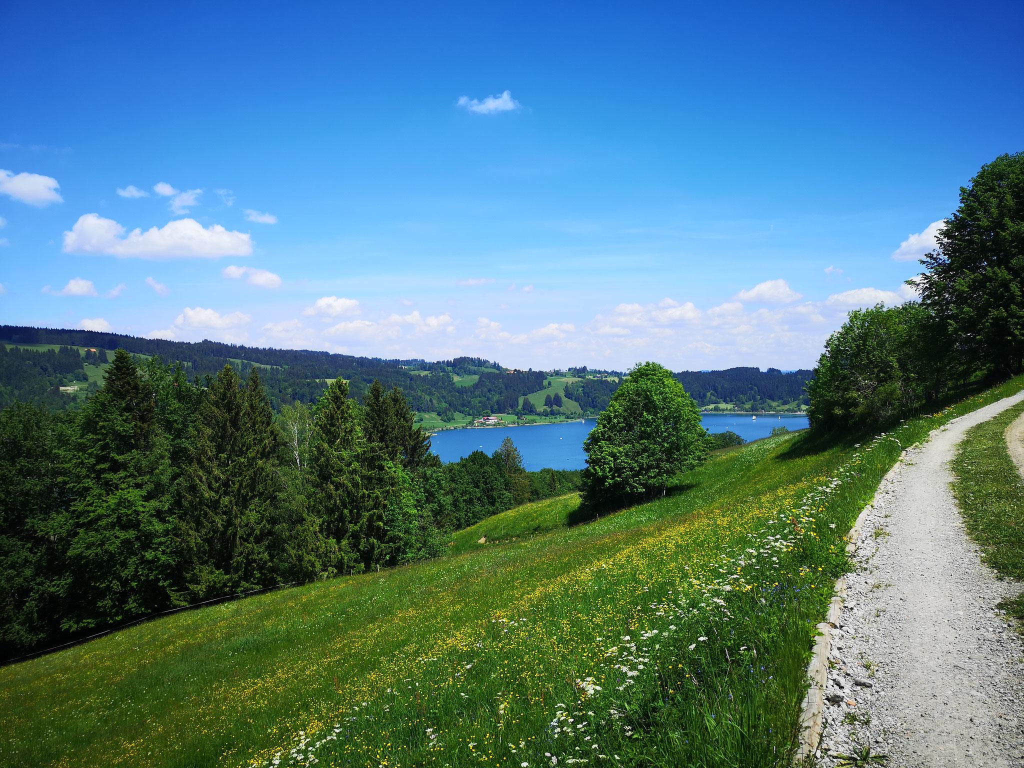 Alpsee bei Immenstadt
