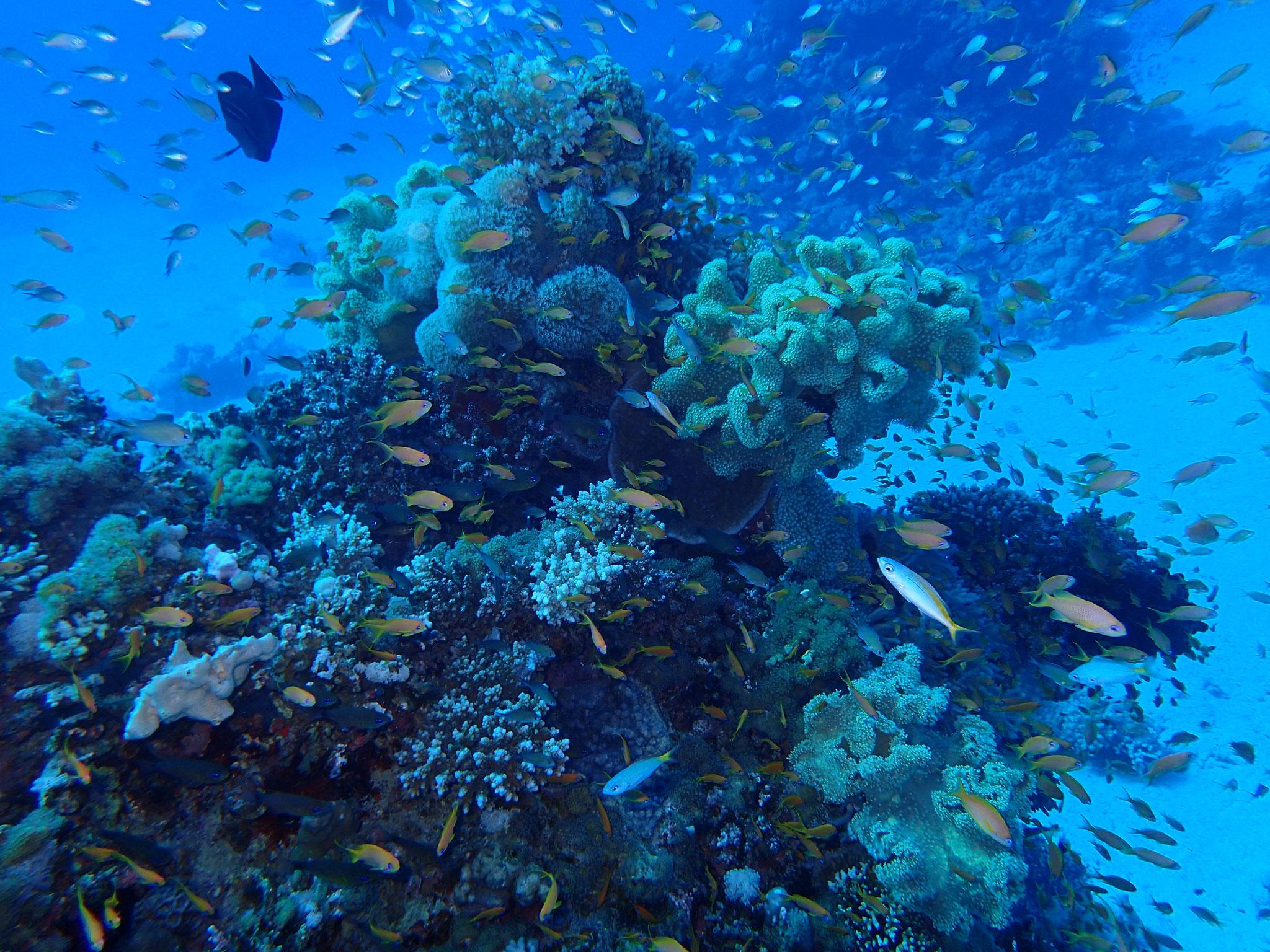 Wunderschöne Riffe