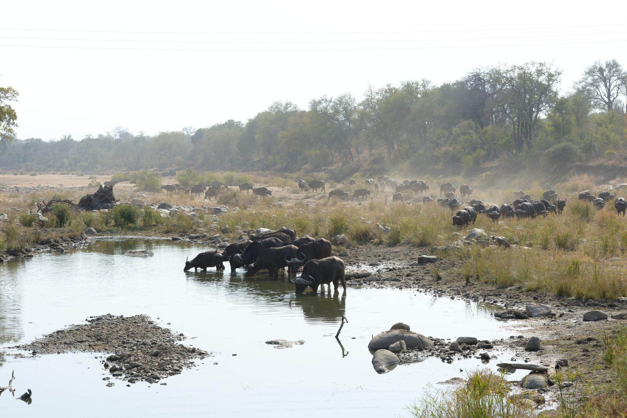 Auf dem Rücktransfer zum Kruger-MpumalangaFlugplatz...