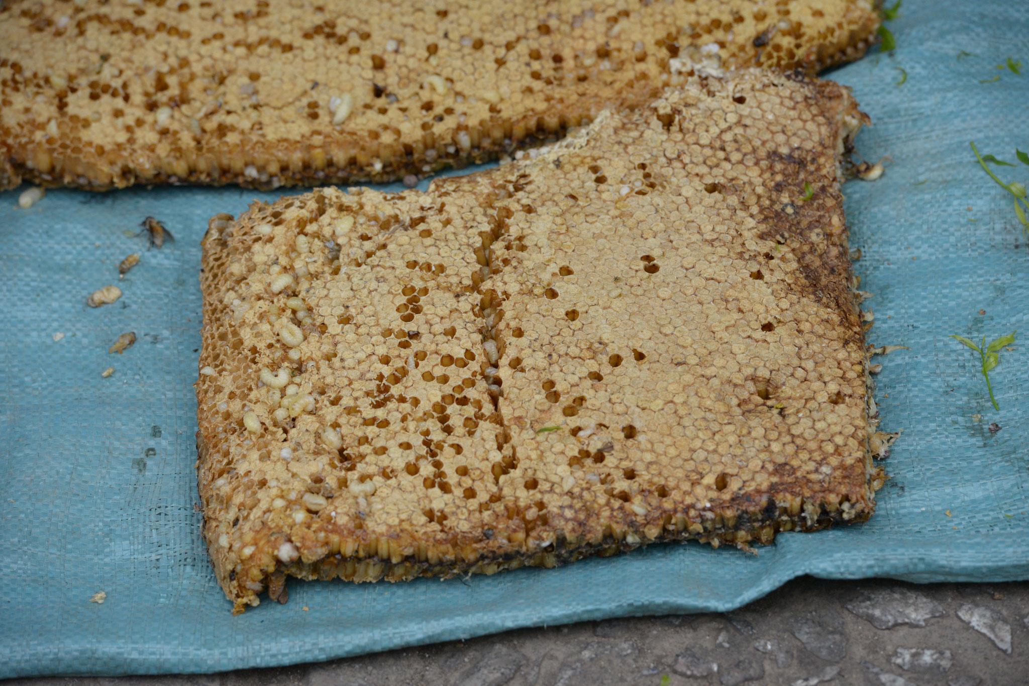 ... Delikatessen, wie Honigwaben mit Maden...