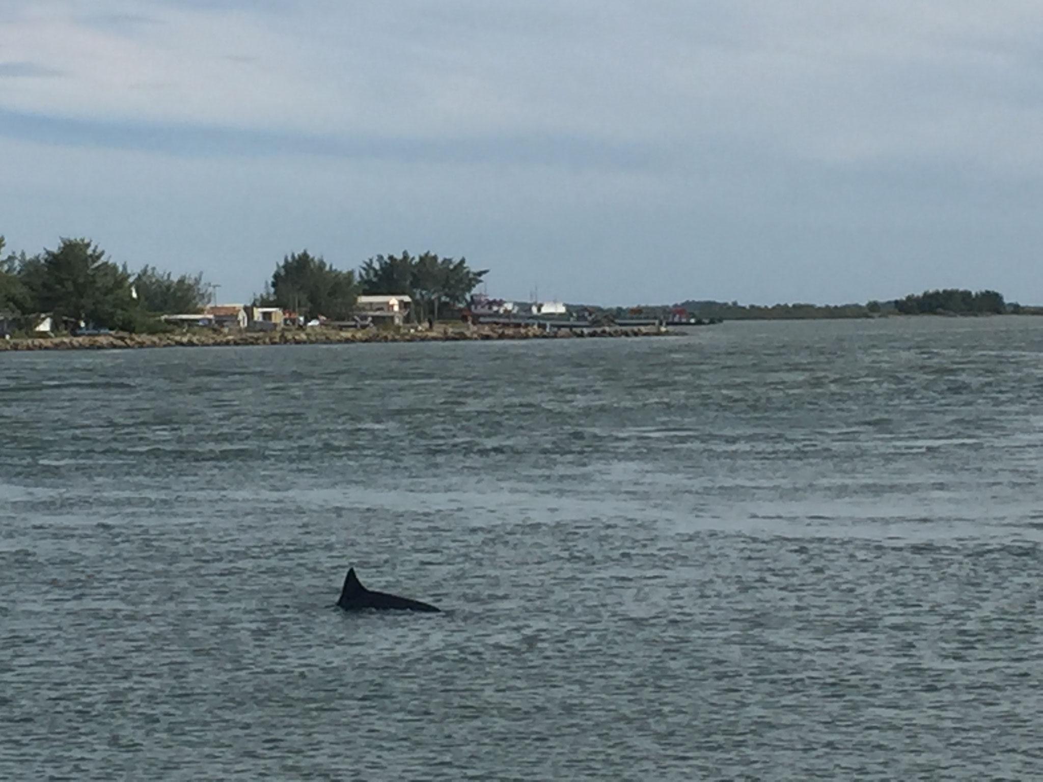 ....Delfinen