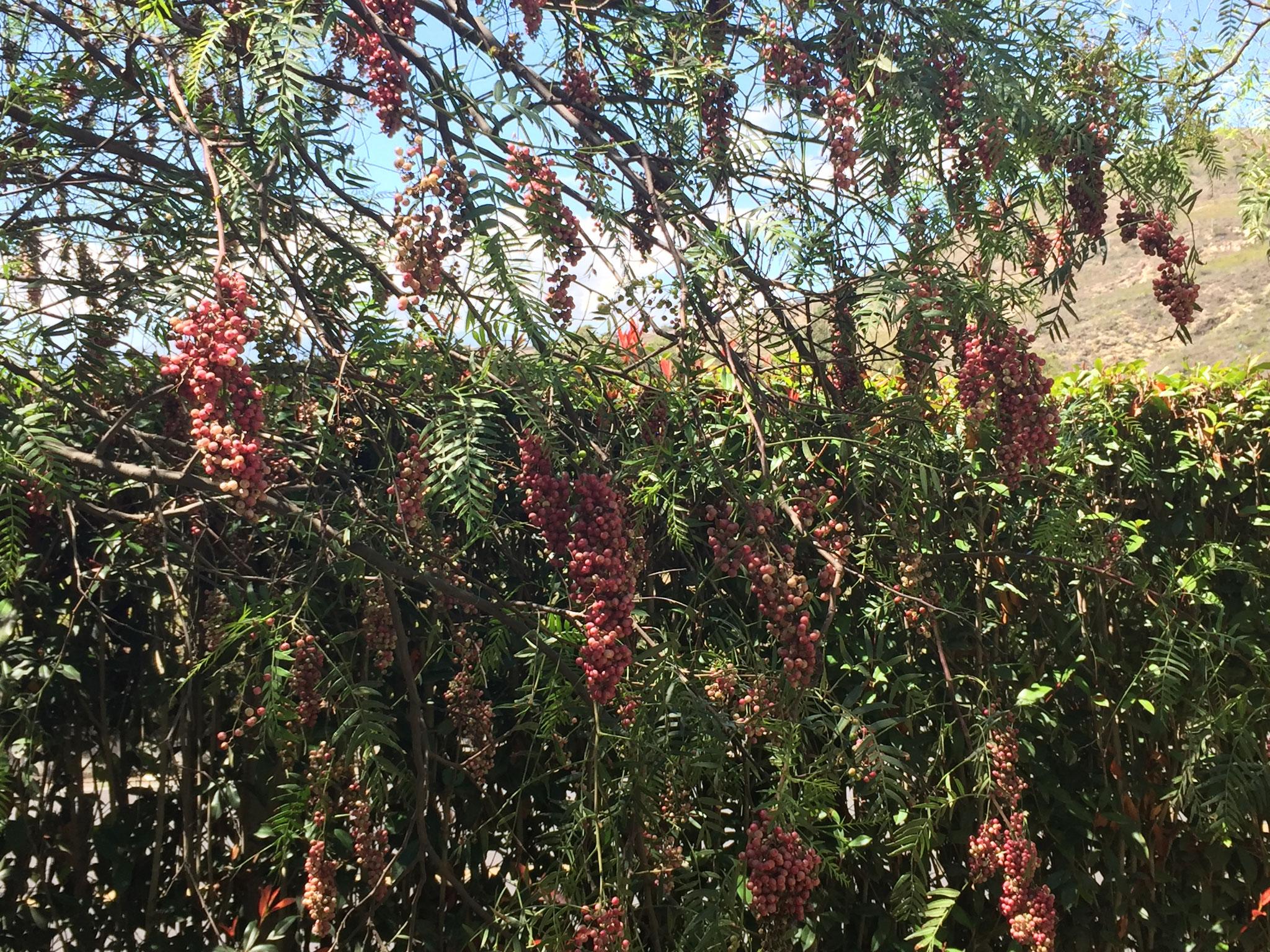 Viele Pflanzen, Finca Sommerwind
