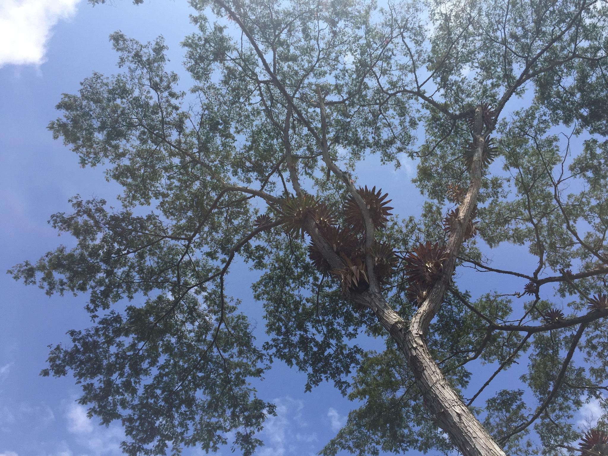 Orchideen auf den Bäumen