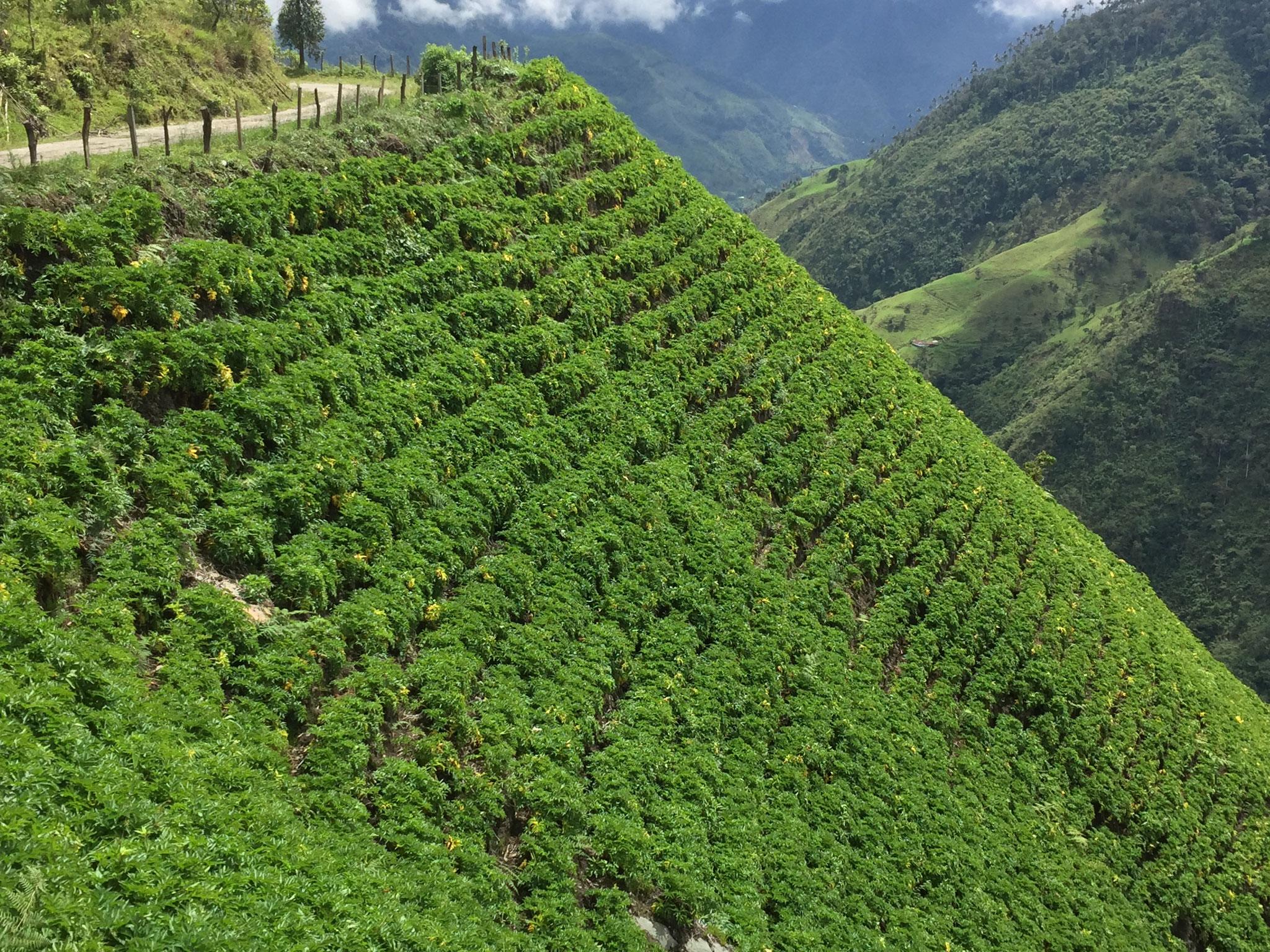 Pflanzungen an steilen Abhängen