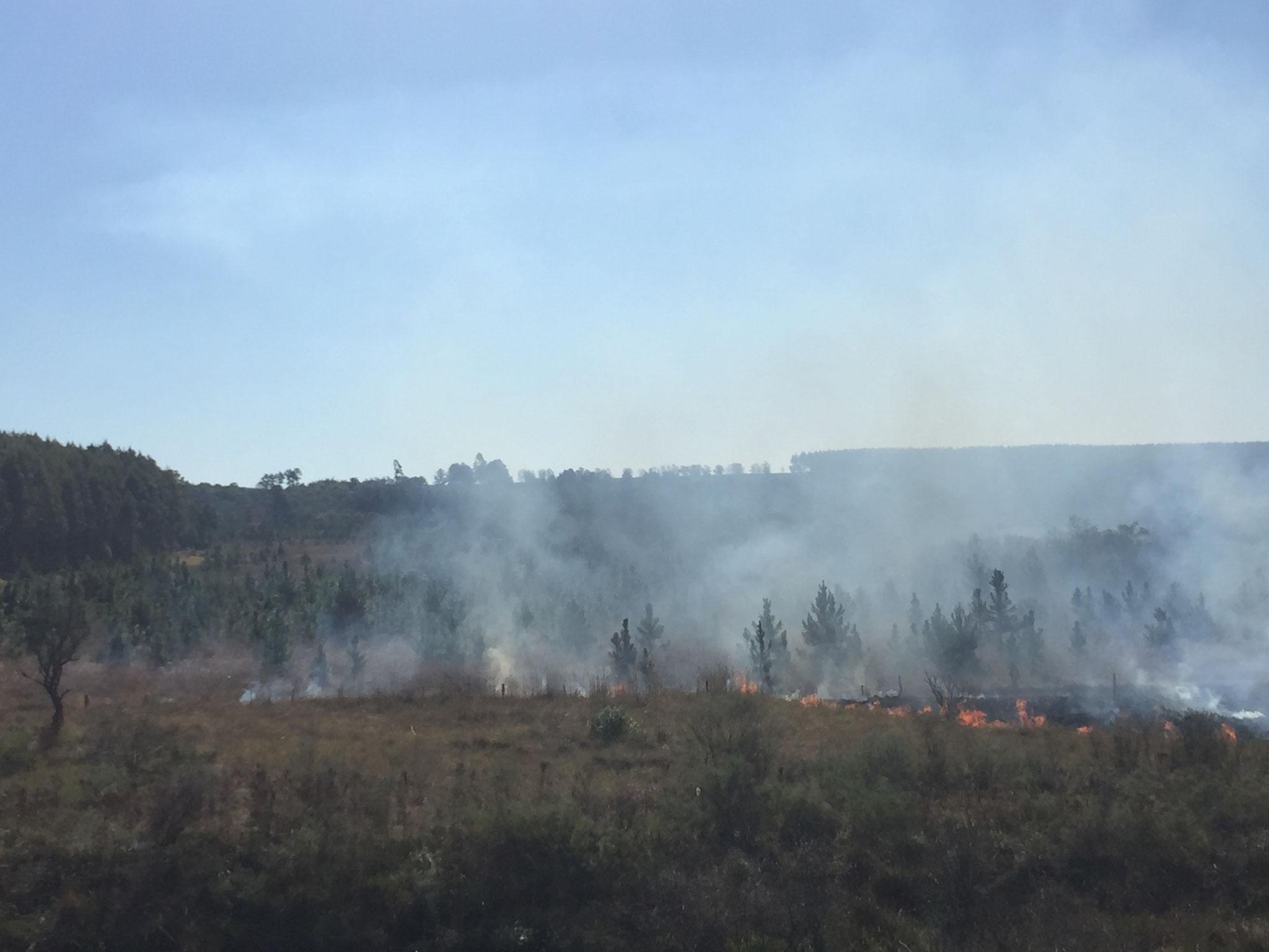 die Felder werden abgebrannt