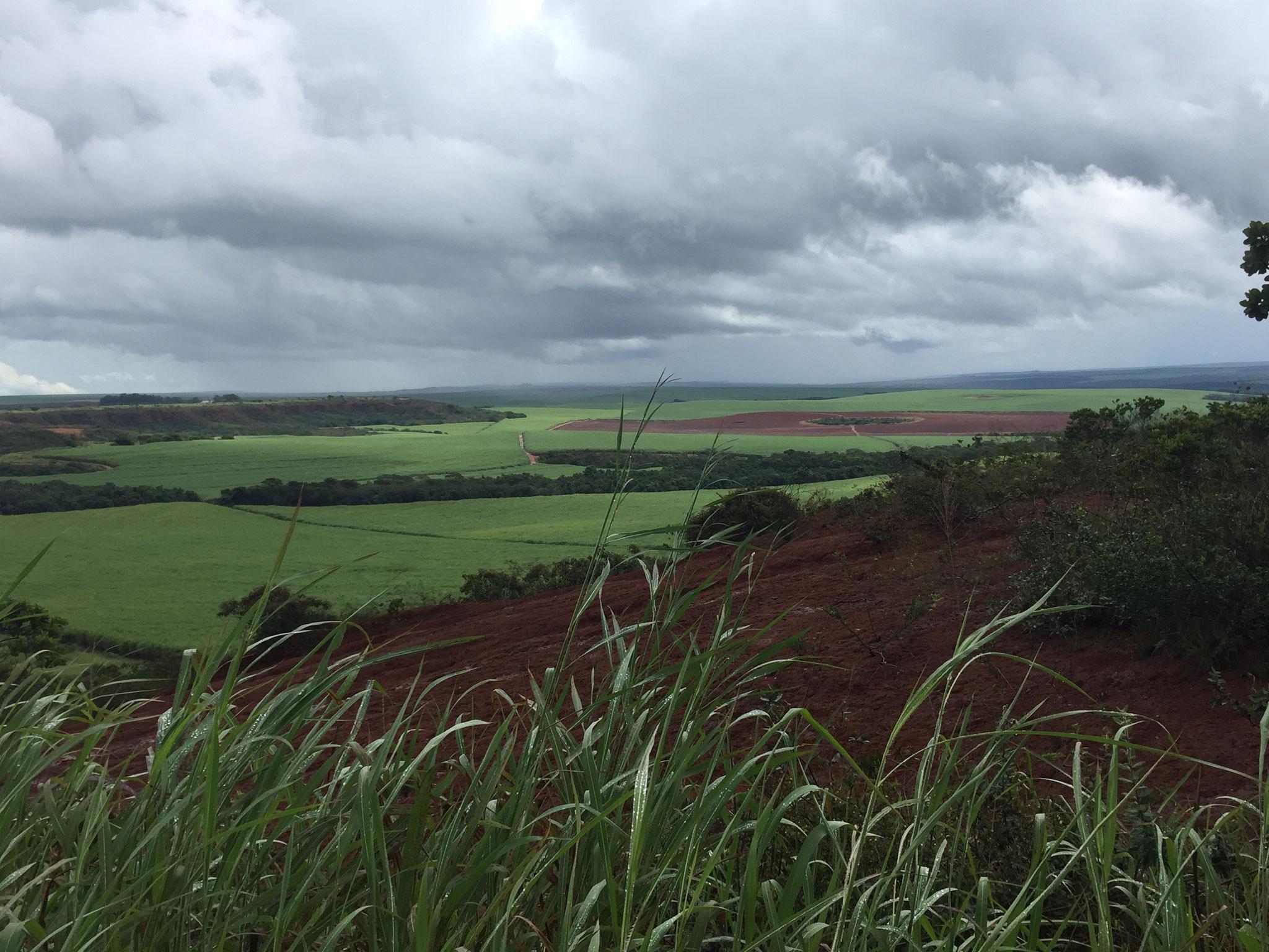 Riesige Felder bis Paraguay