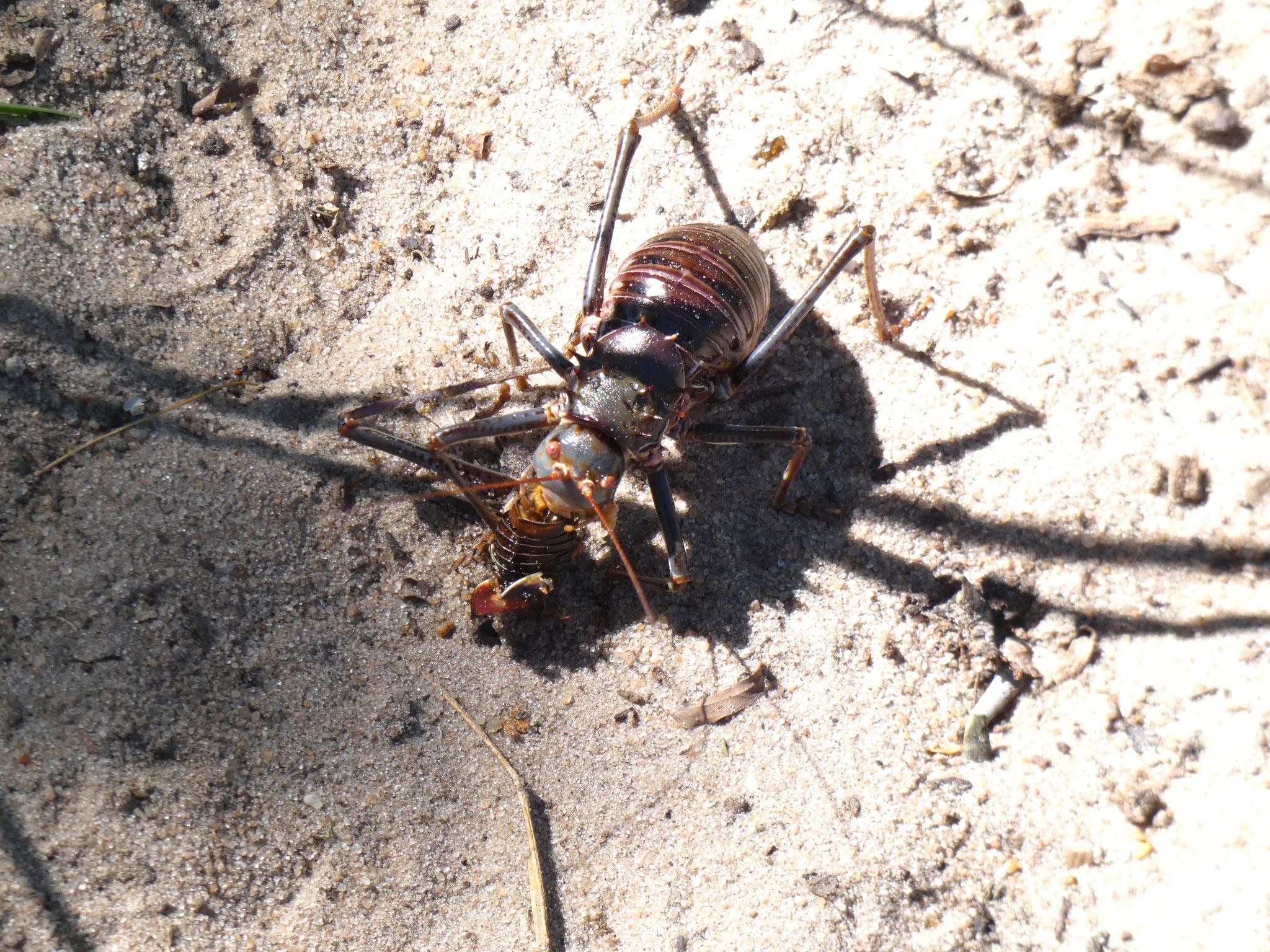 diese Käfer sind eine Plage für uns!