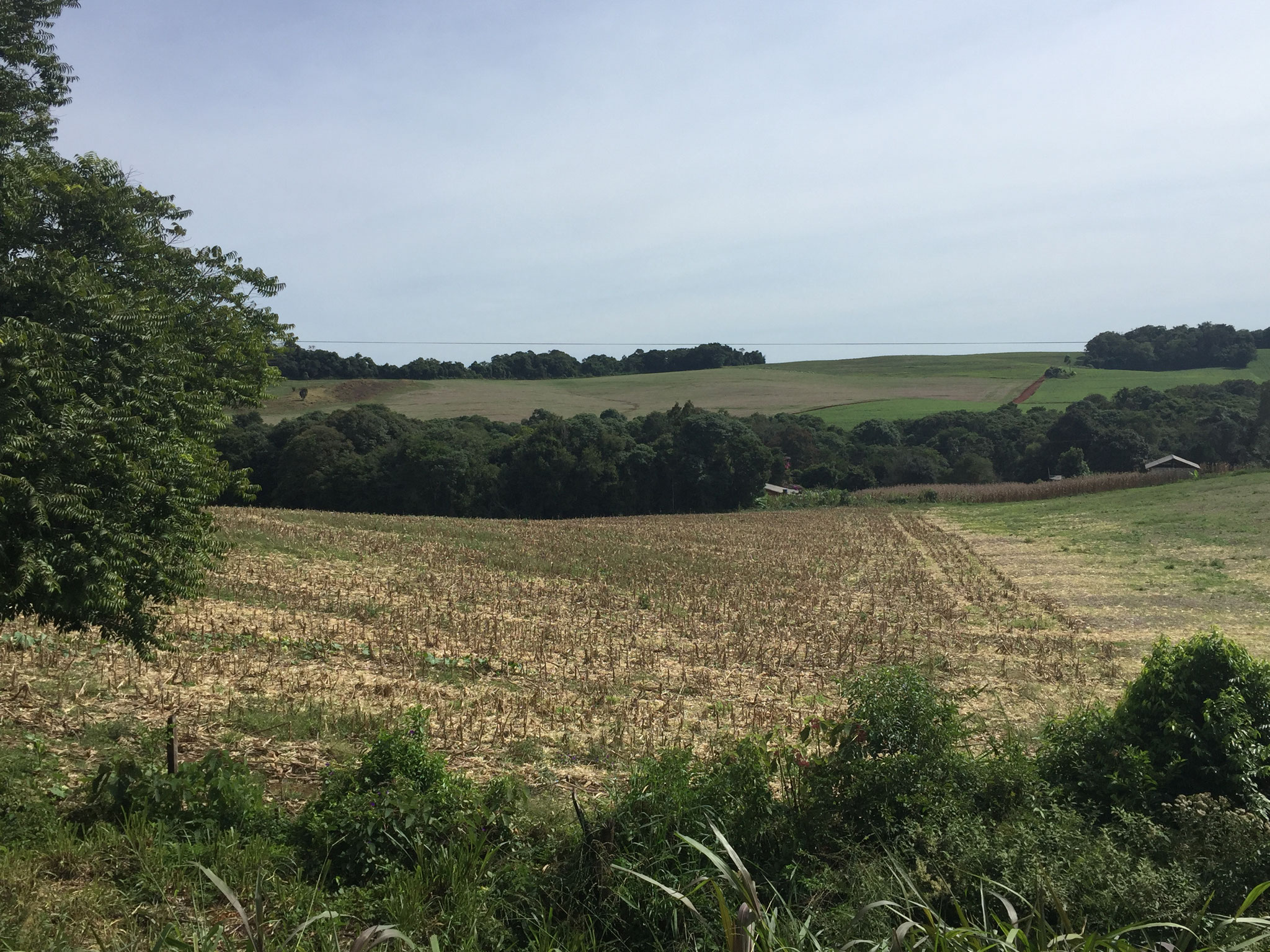 Soja- und Maisfelder in Brasilien
