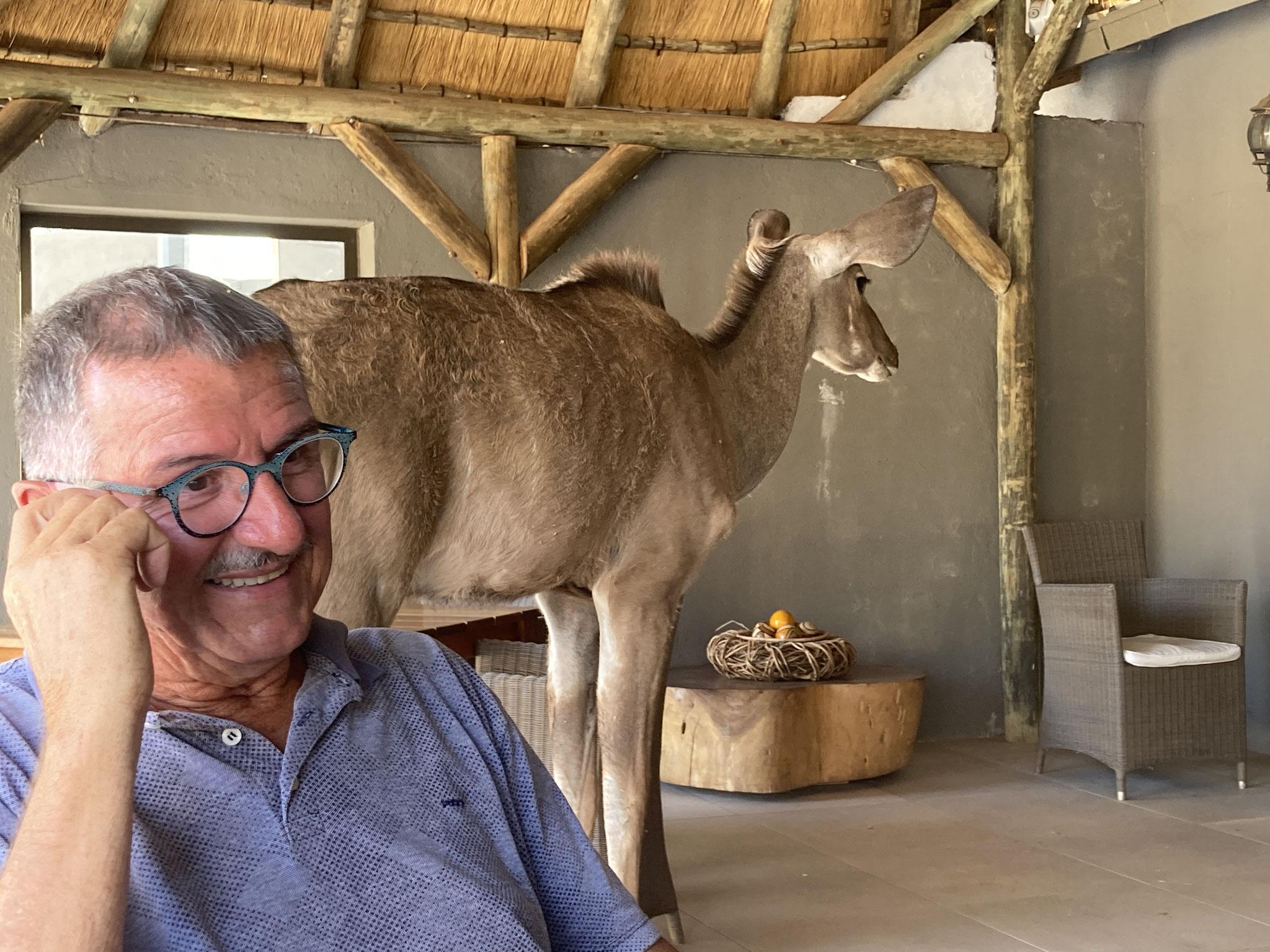 Kudu in Bagatelle