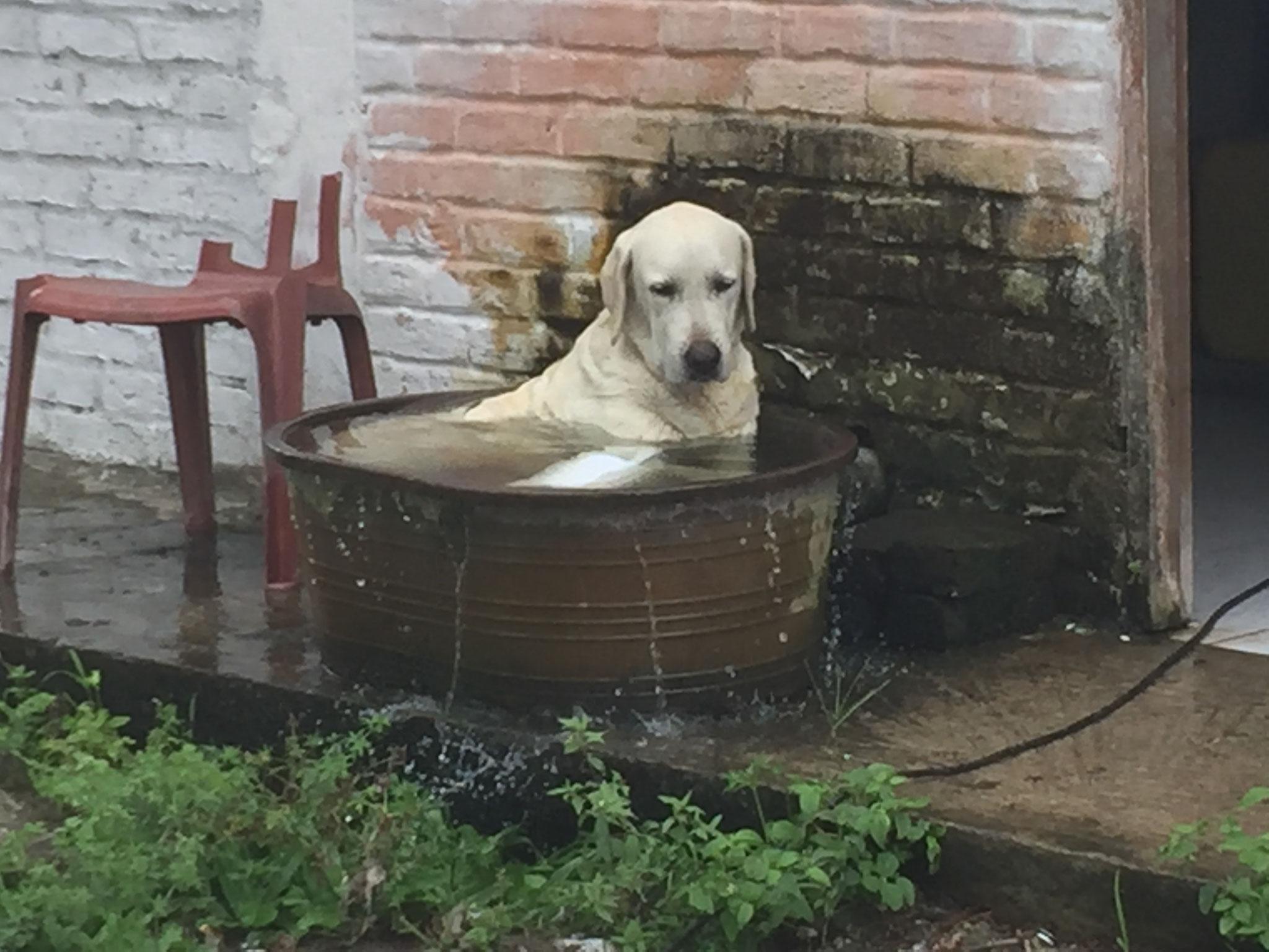 Hundebad bei der Tropenhitze!