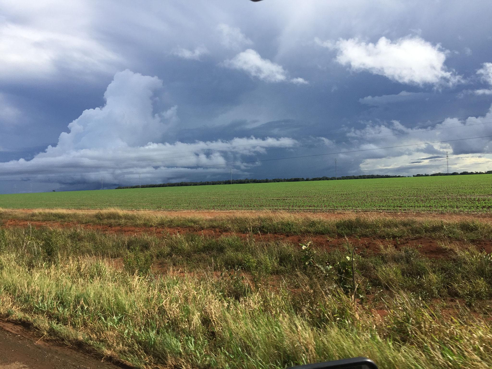 ..... und riesige Felder