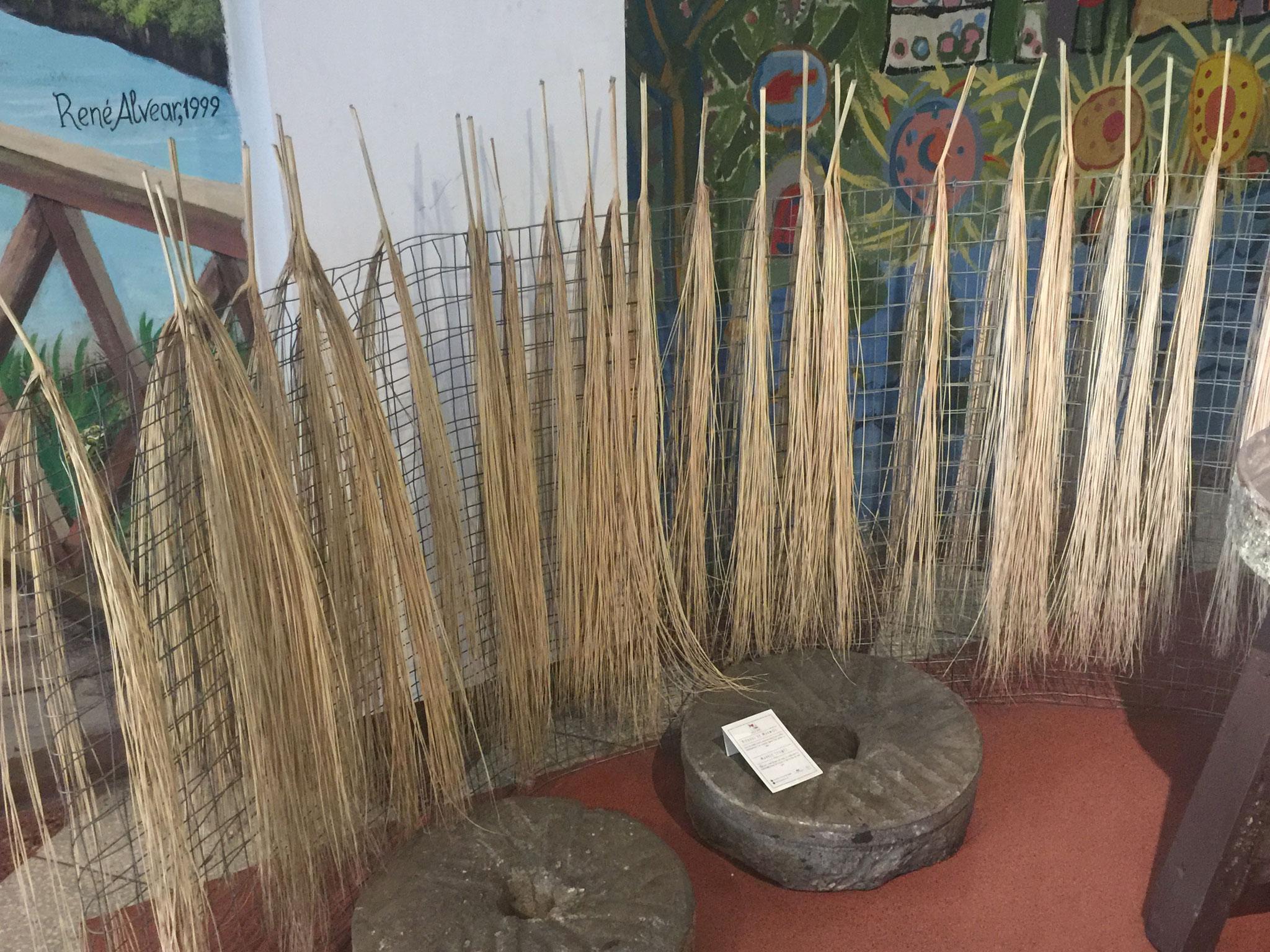 Fasern für die Panamahüte.....