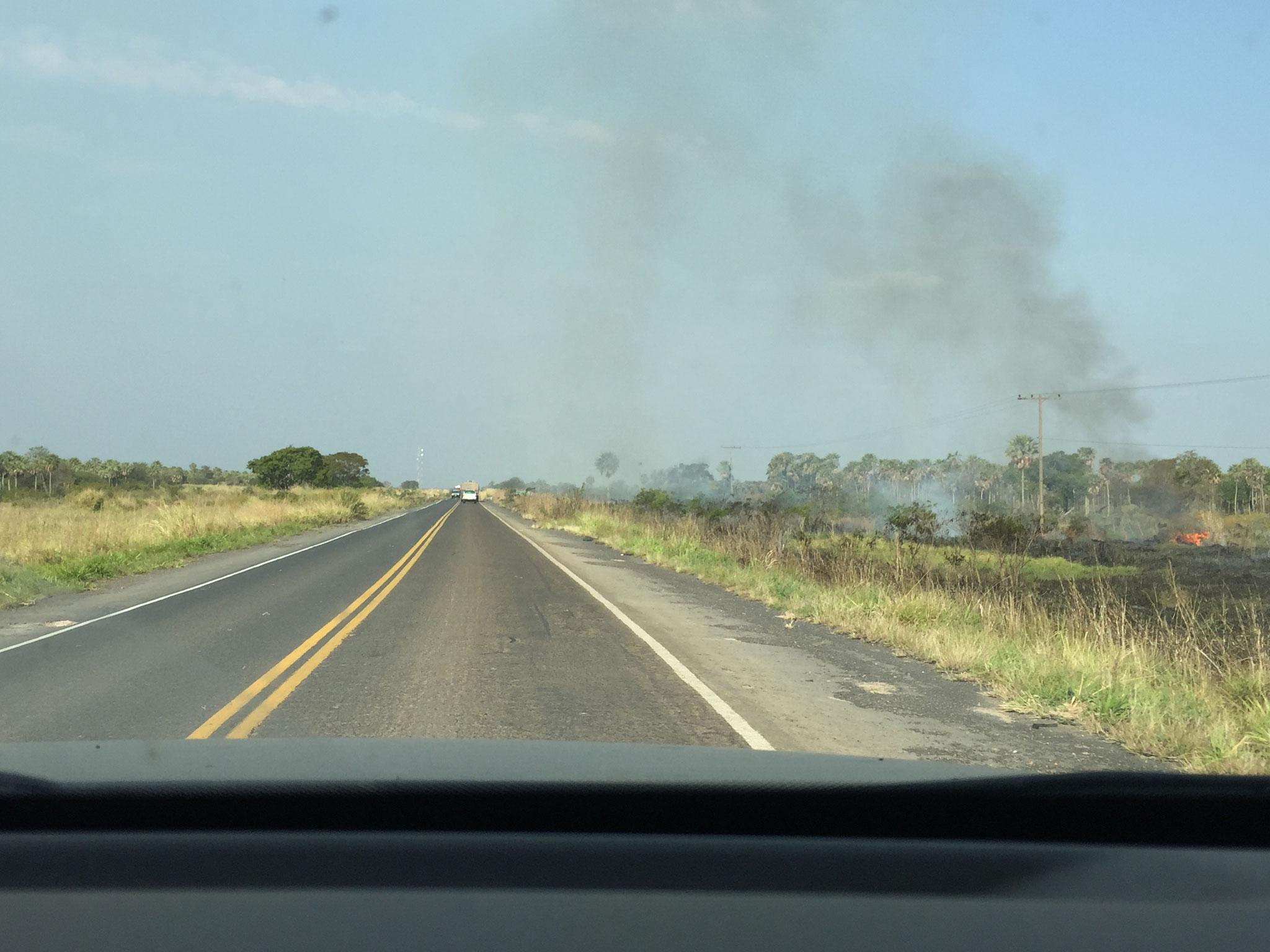 Felder werden abgebrannt