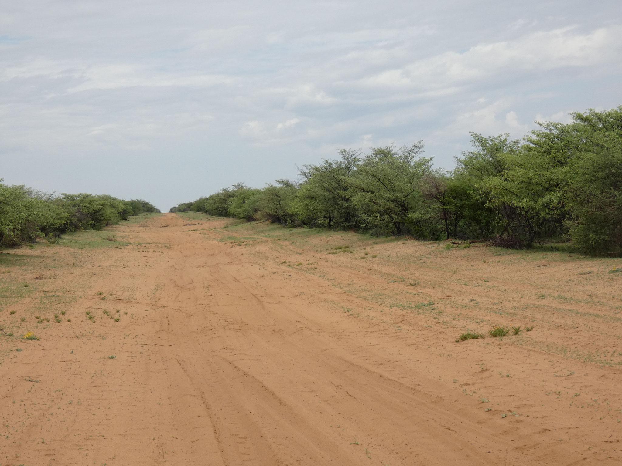 Piste in den Kalagadi Frontiernationalpark