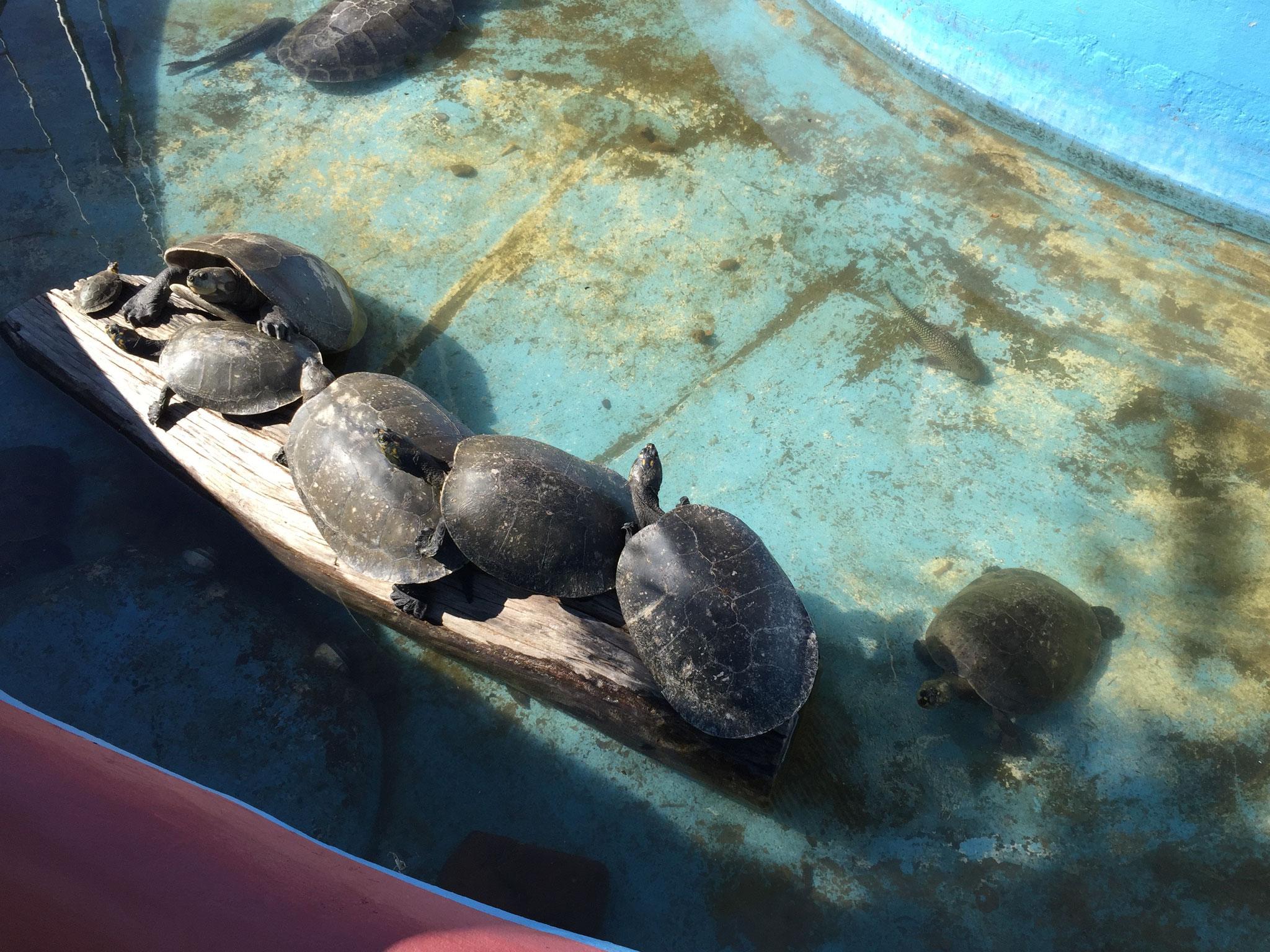 Hotel El Mirador, mit ihren Schildkröten....
