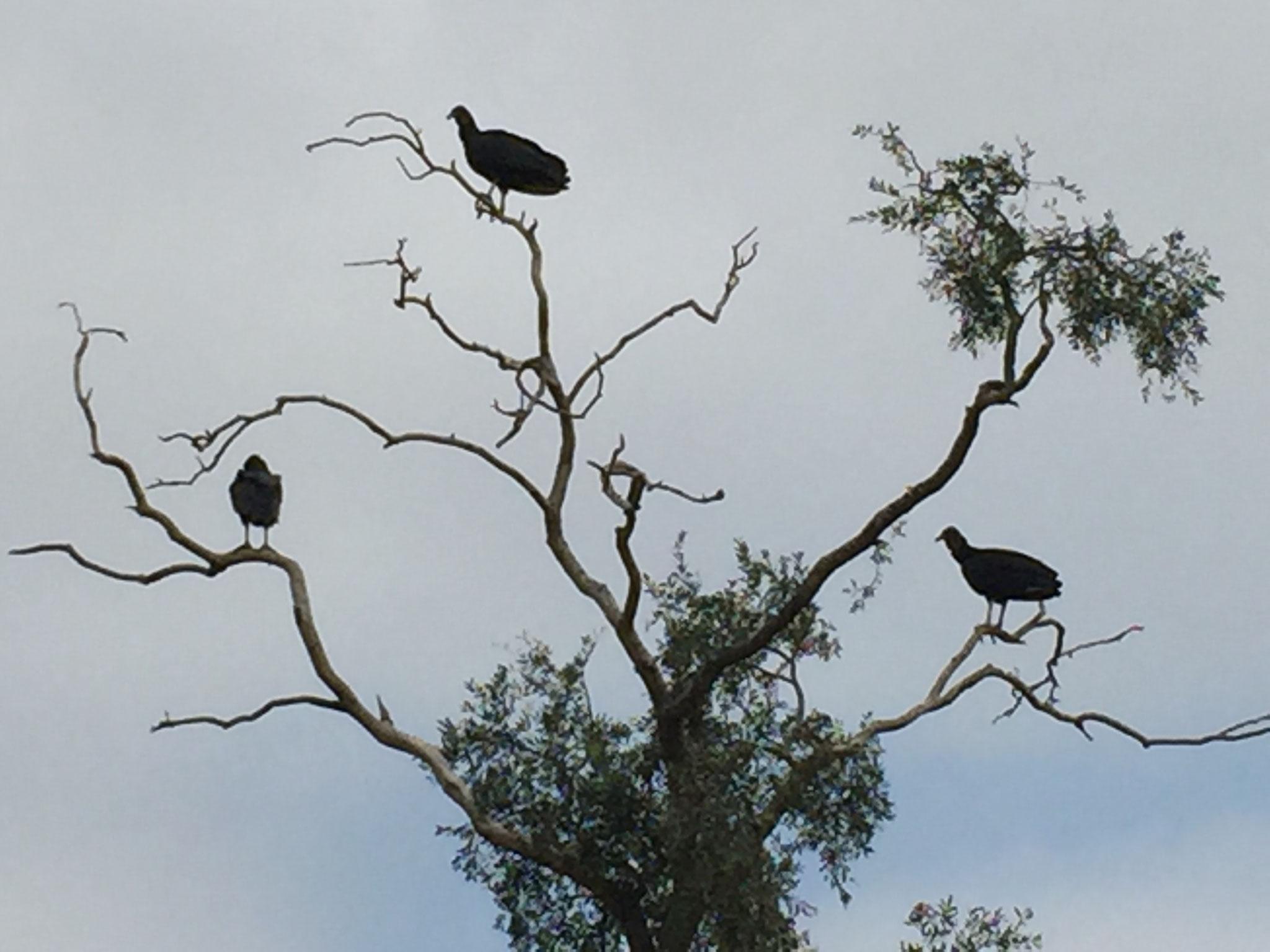 ....mit vielen Vögeln