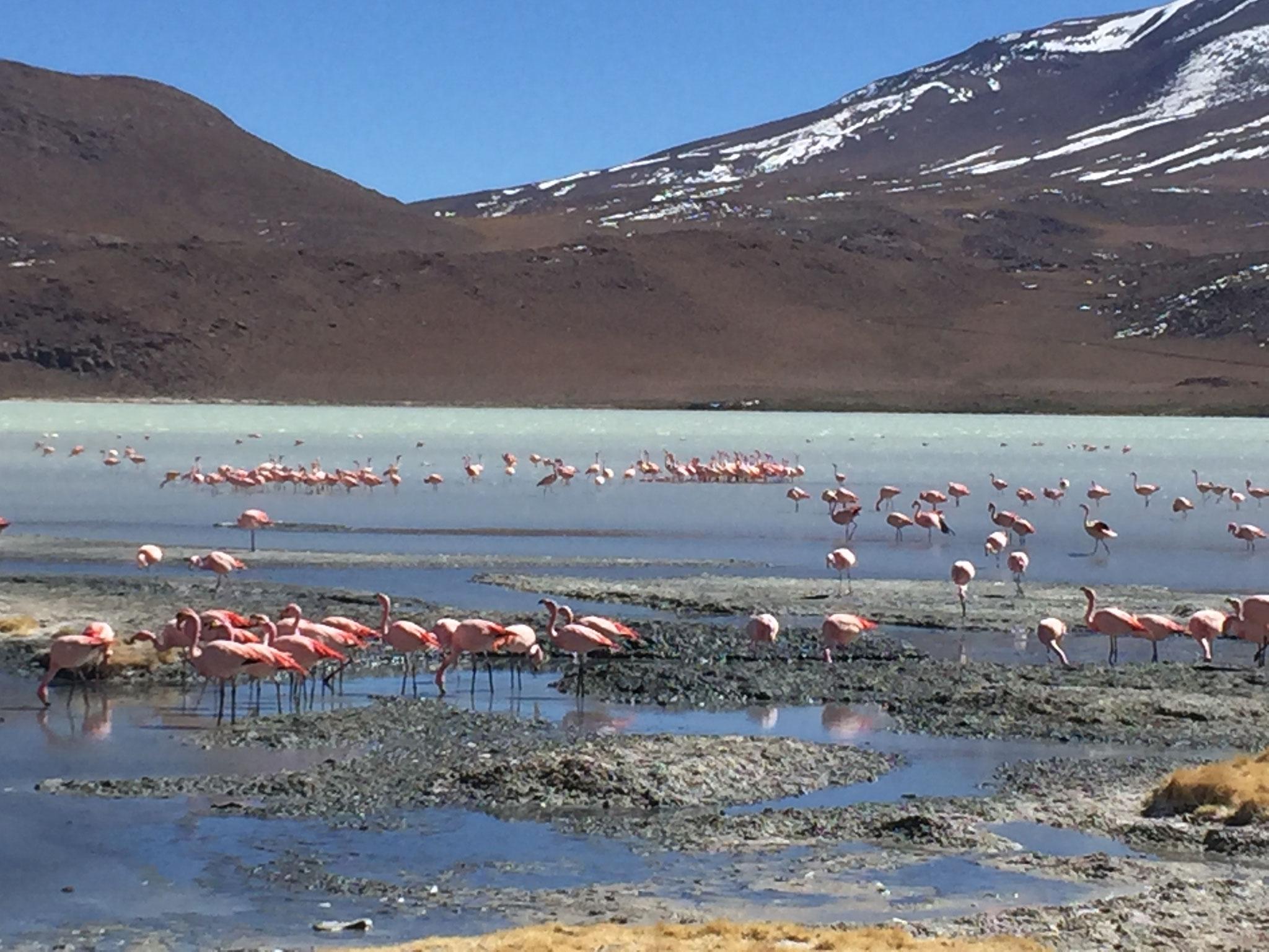 Lagune Hedionda