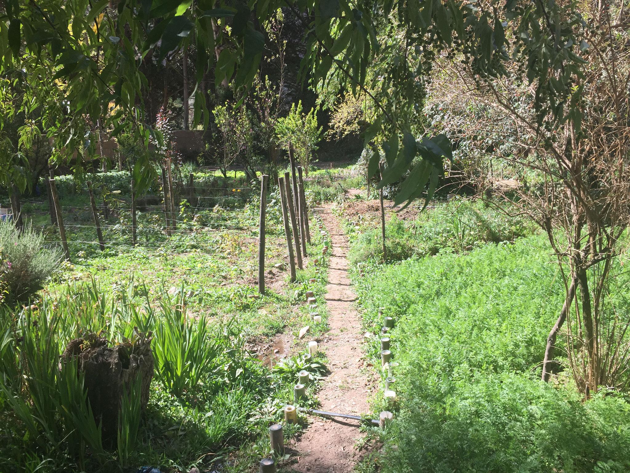 ..... Naturgarten....