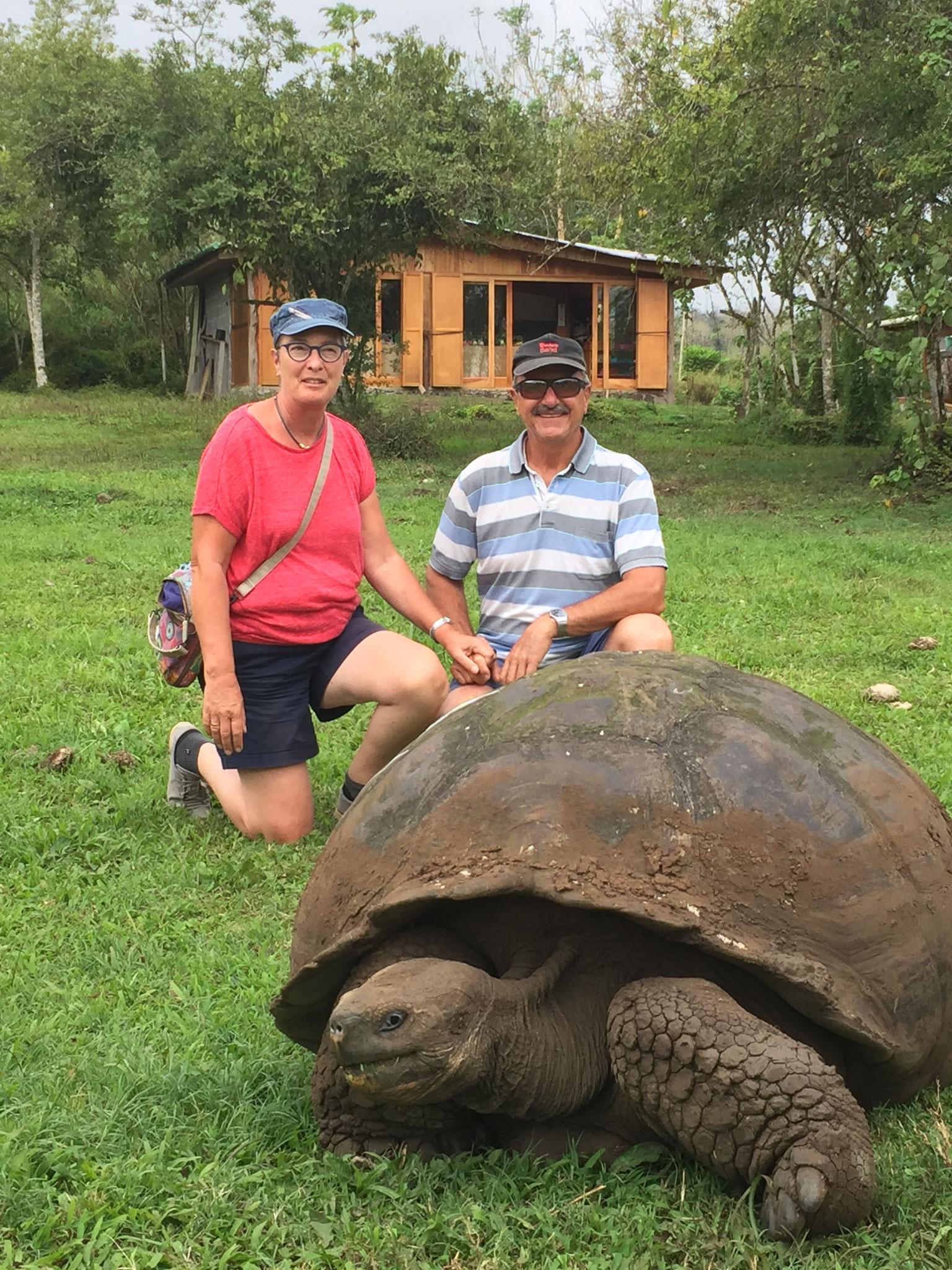Wildlebende Schildkröten