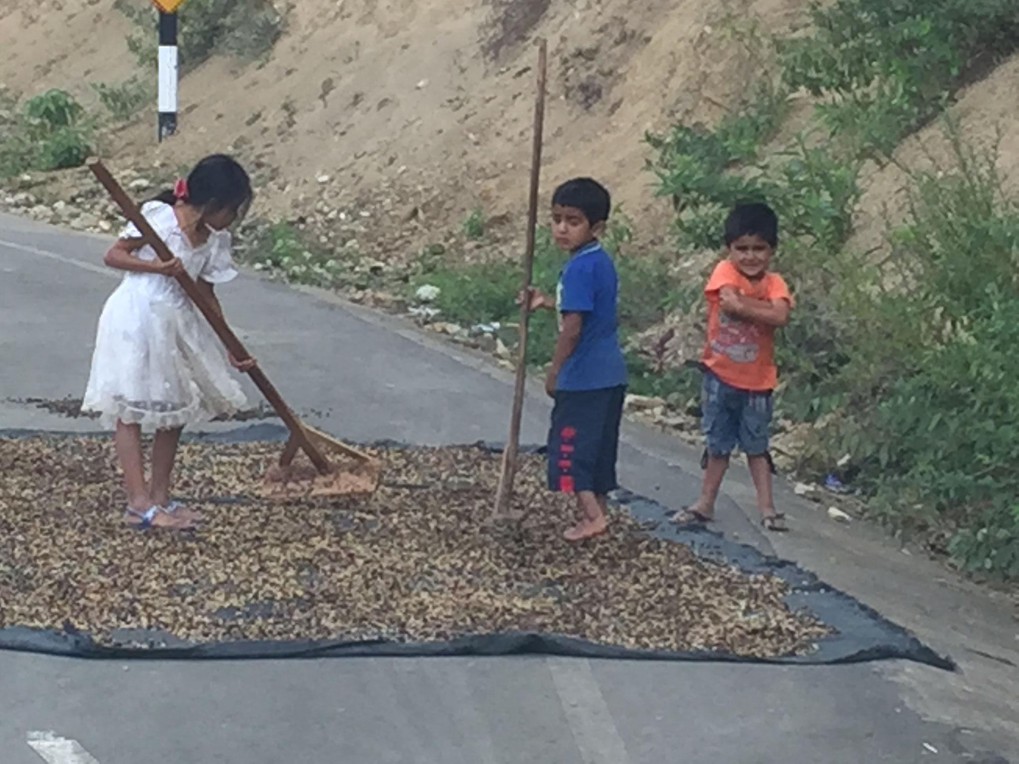 Kaffeebohnen trocknen auf der Strasse