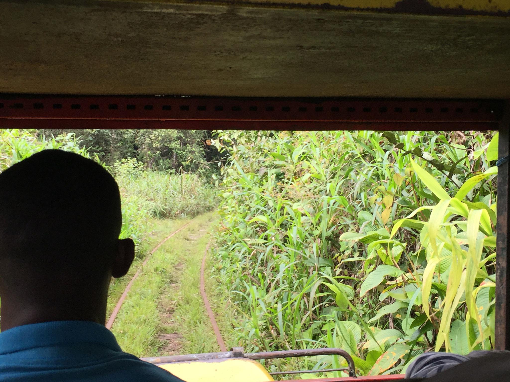 Fahrt durch den Dschungel