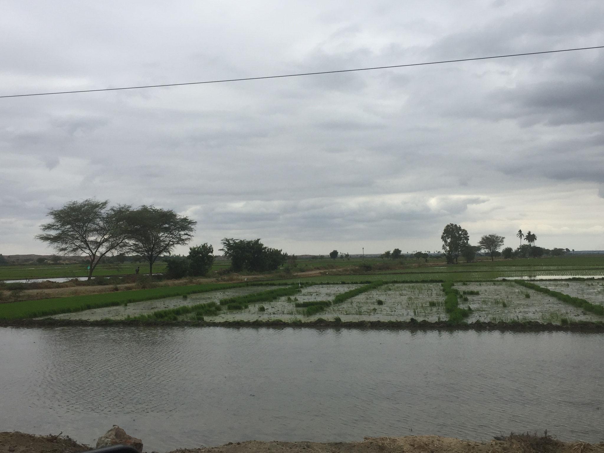 ... und vielen Reisplantagen