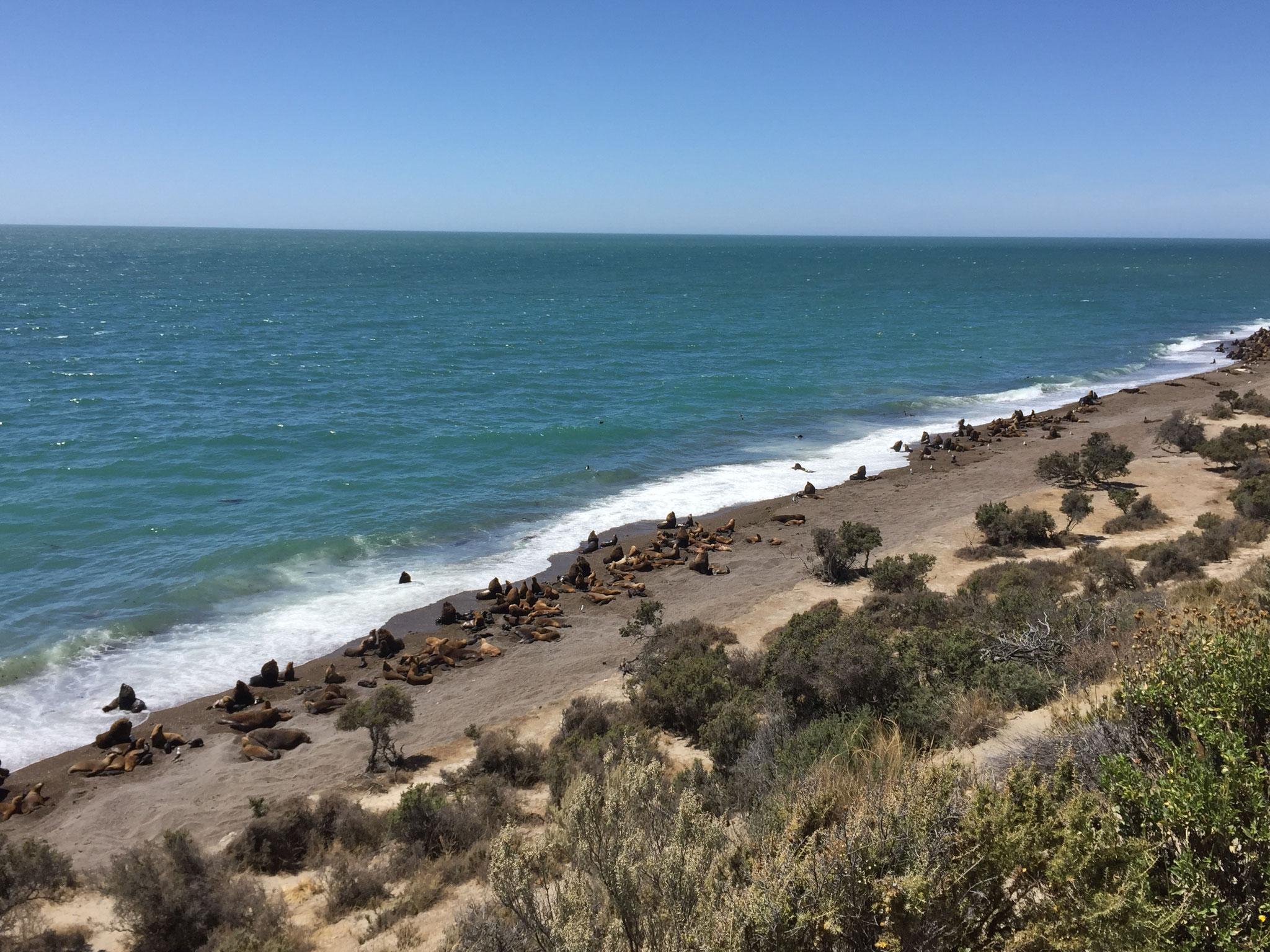 Seelöwen und Seeelefanten
