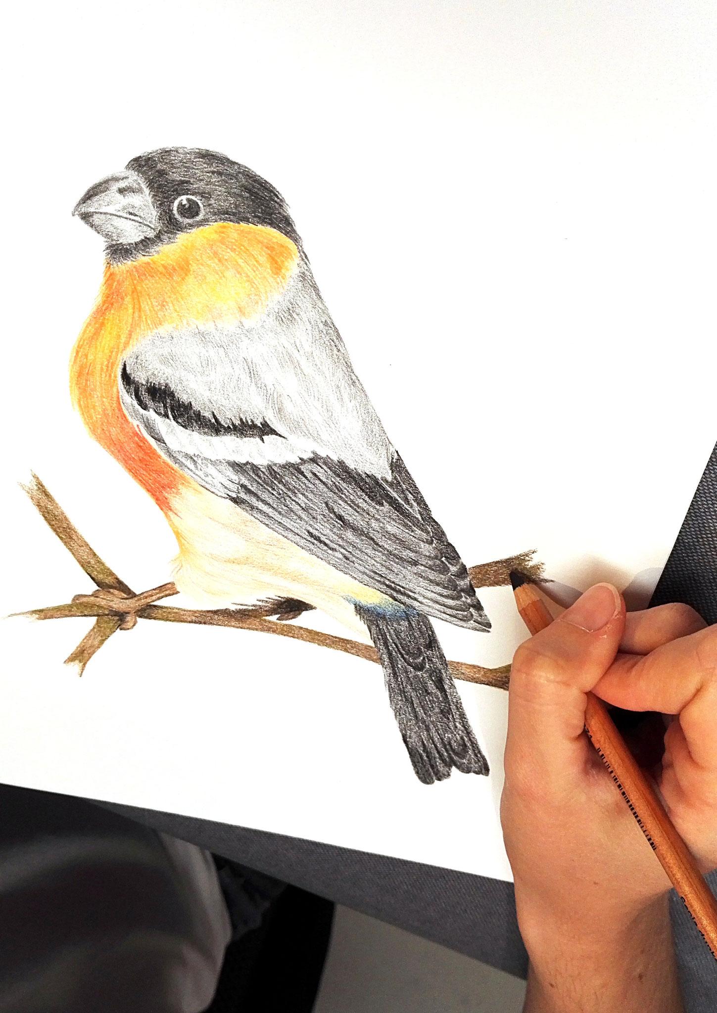 crayons de couleurs par Céline