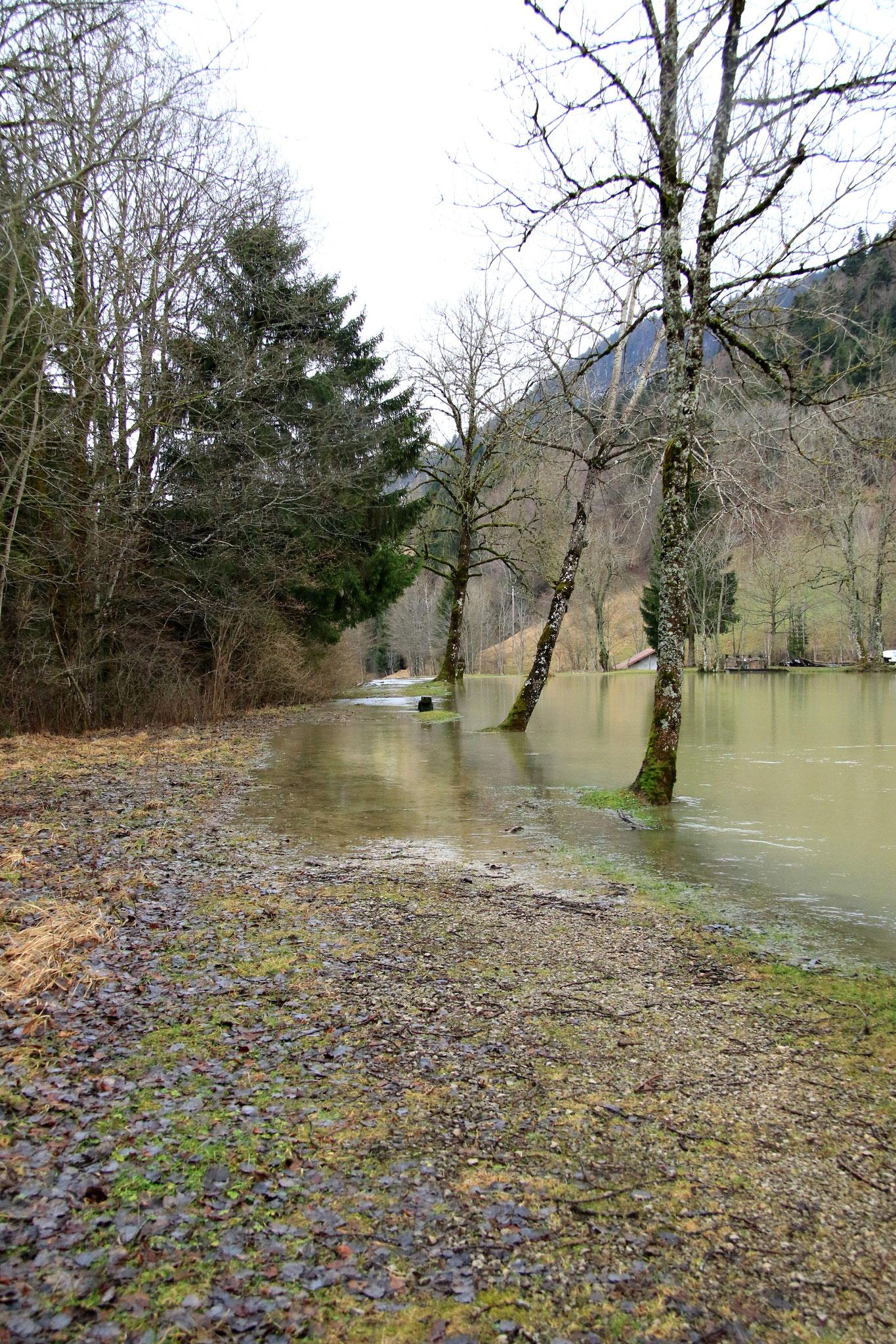 rive du petit étang