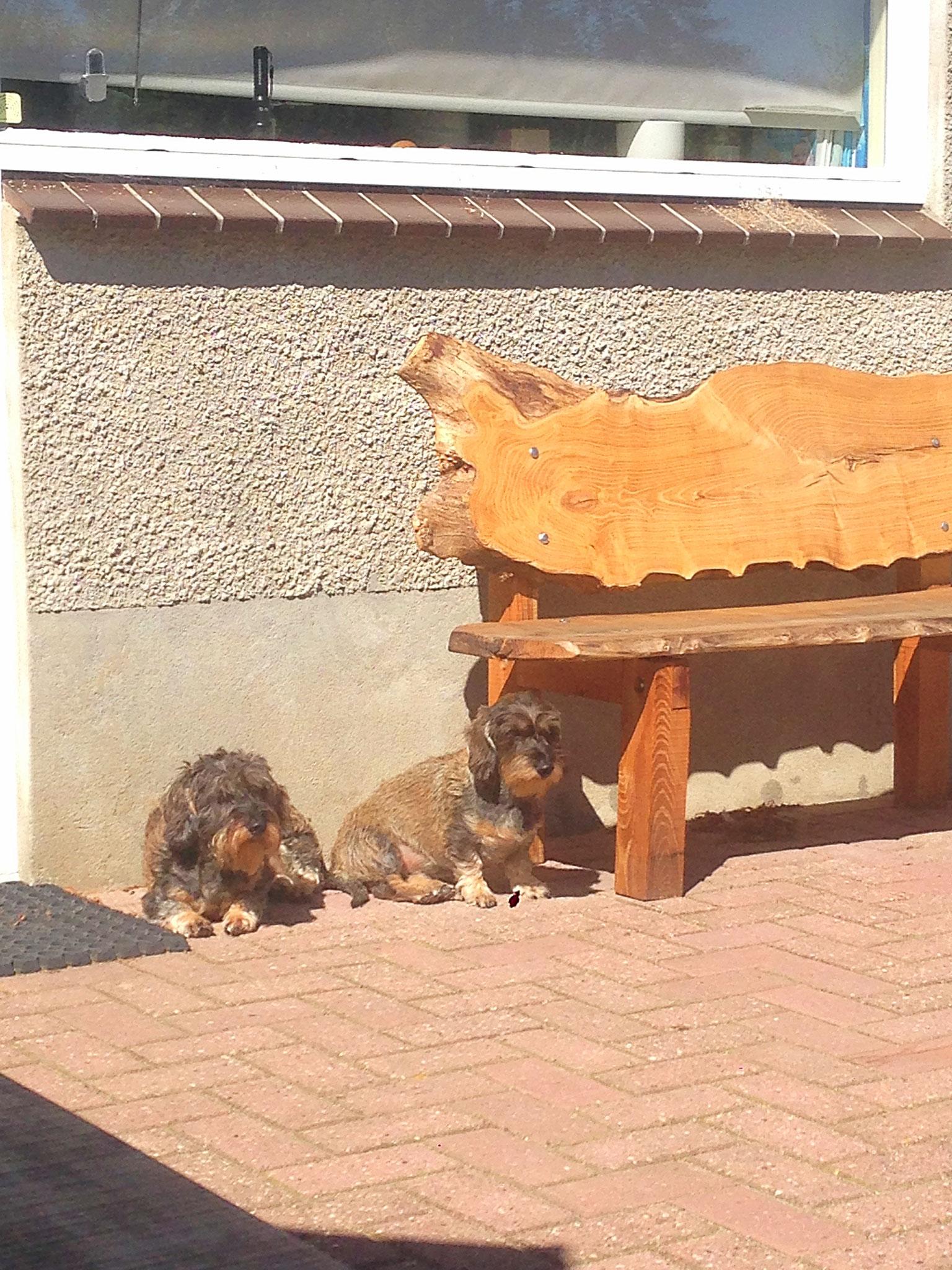 Hondjes rusten uit