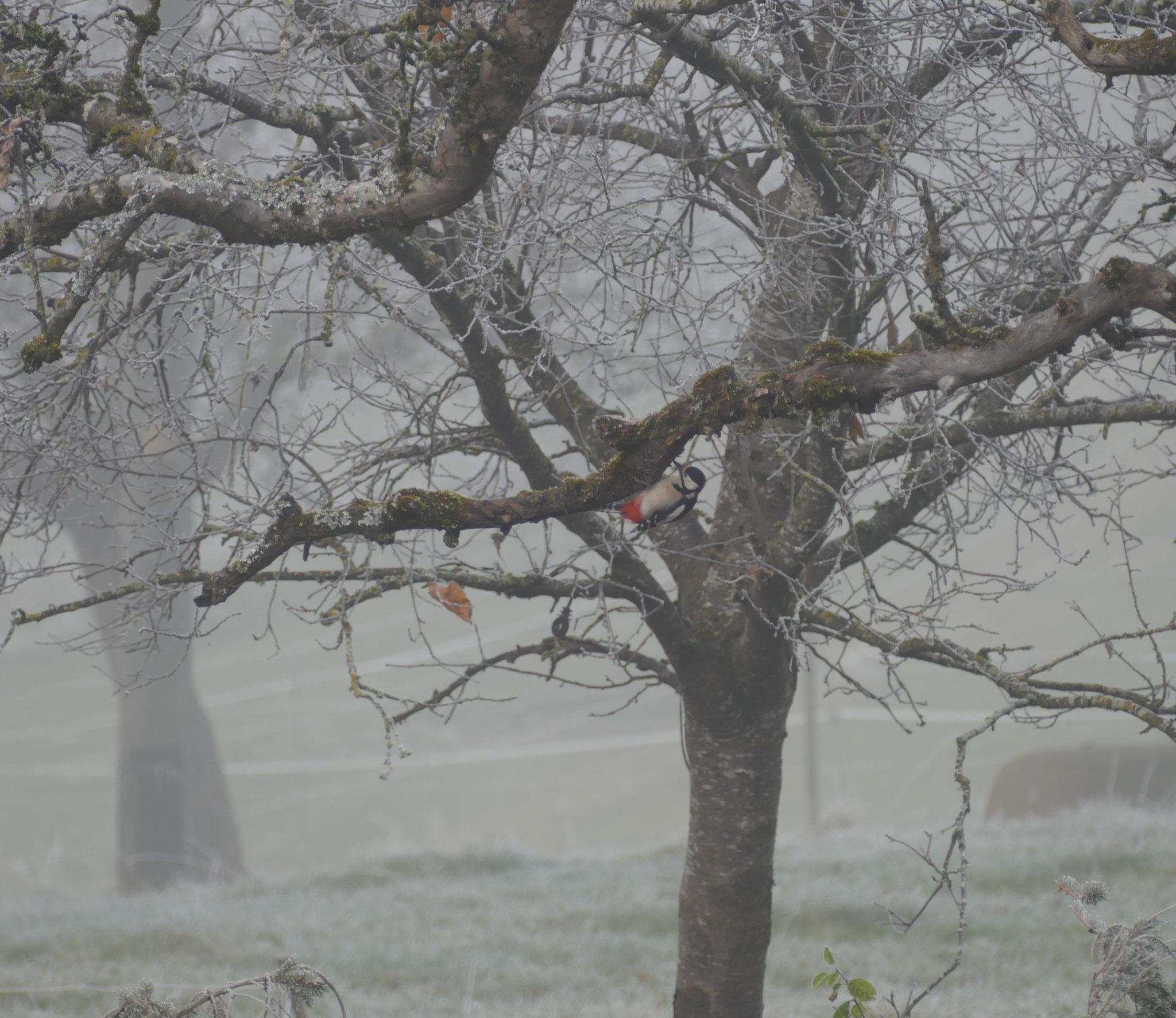 Kein Tannenbaum mit Weihnachtsschmuck, sondern für einmal ein Obstbaum in unserer winterlichen Hoschtet mit buntem natürlichen Schmuck.