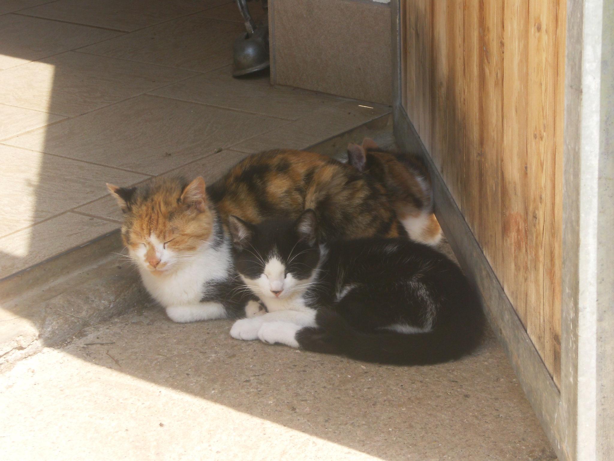 Katzen Biohof Haus Wieser Abtenau Salzburg Land