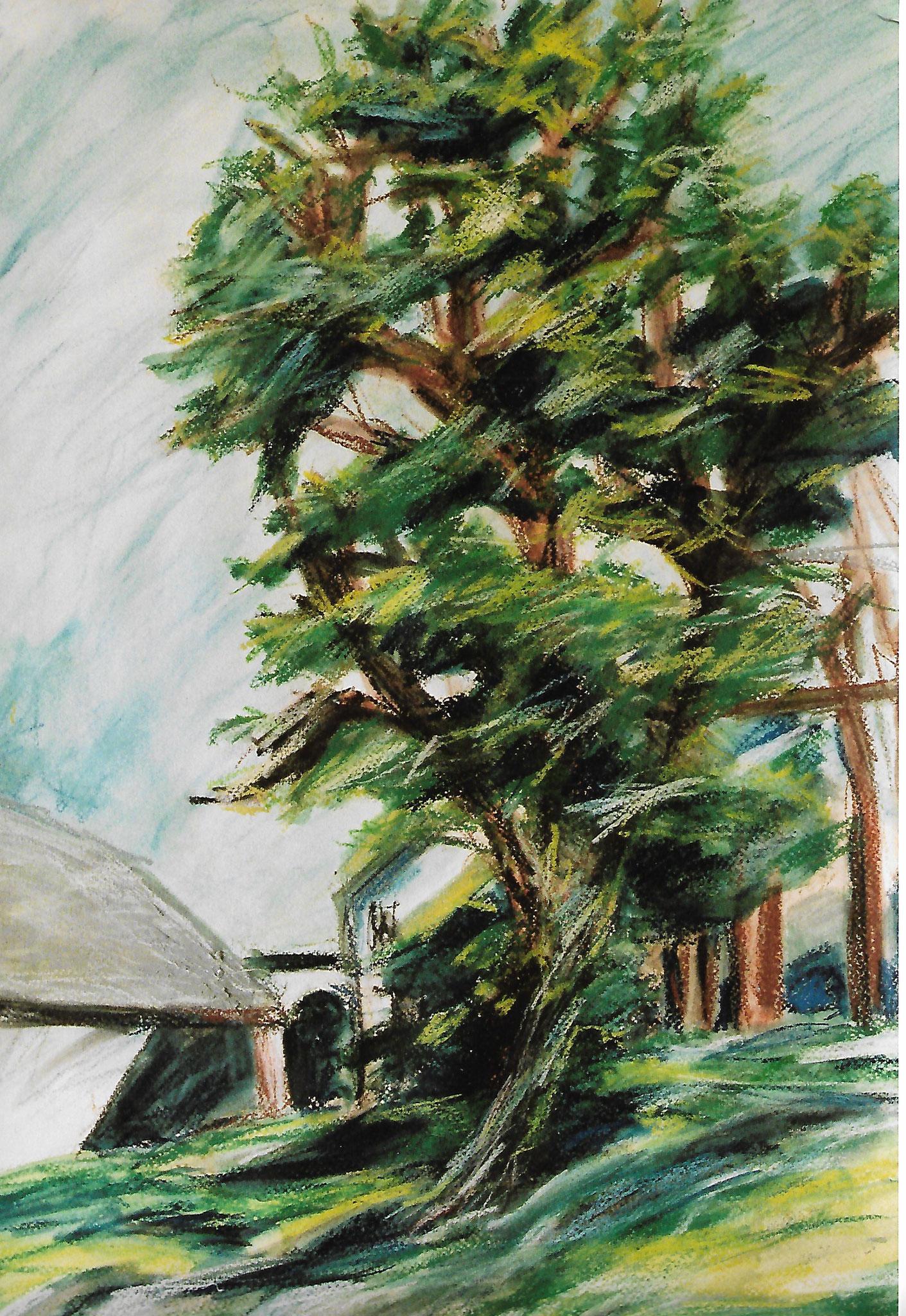 """Baum beim Gasthaus """" Alm"""" bei Brunnenthal"""