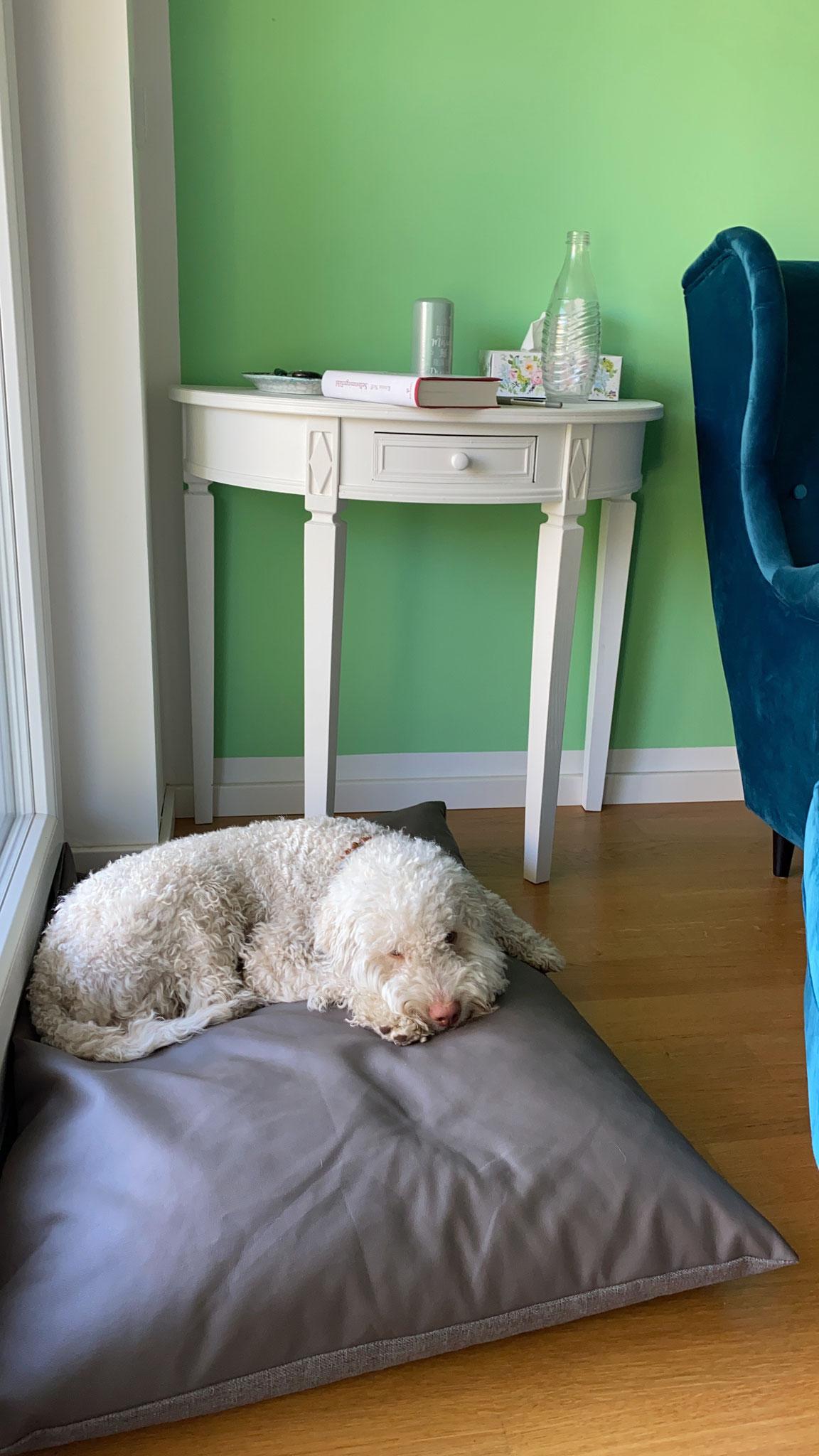 """Tiergestützte Psychotherapie mit Therapiehund """"Neelix"""""""