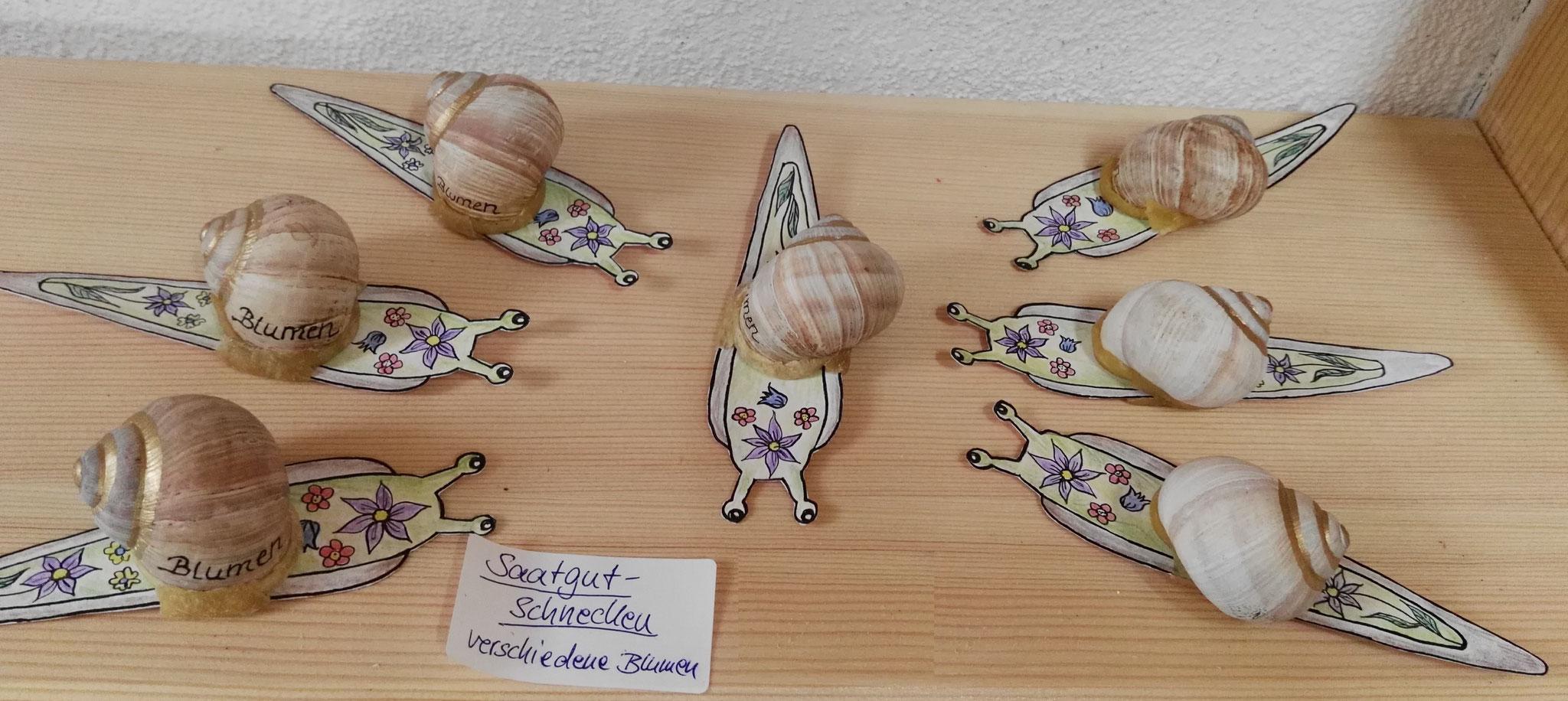 Saatgut-Schnecken gefüllt mit 10 verschiedenen Blumenarten