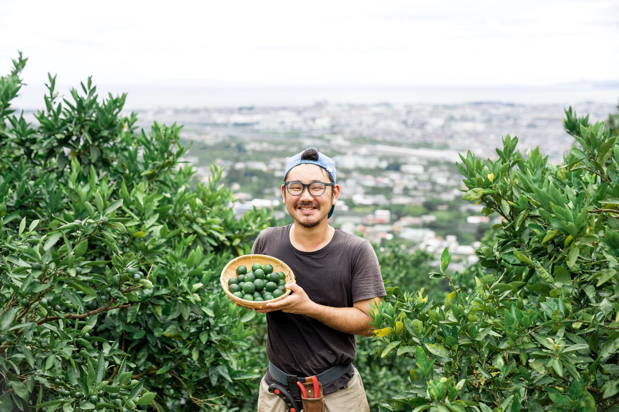 緑みかんの収穫は終わりましたが、緑みかんシロップにしてお届けします!