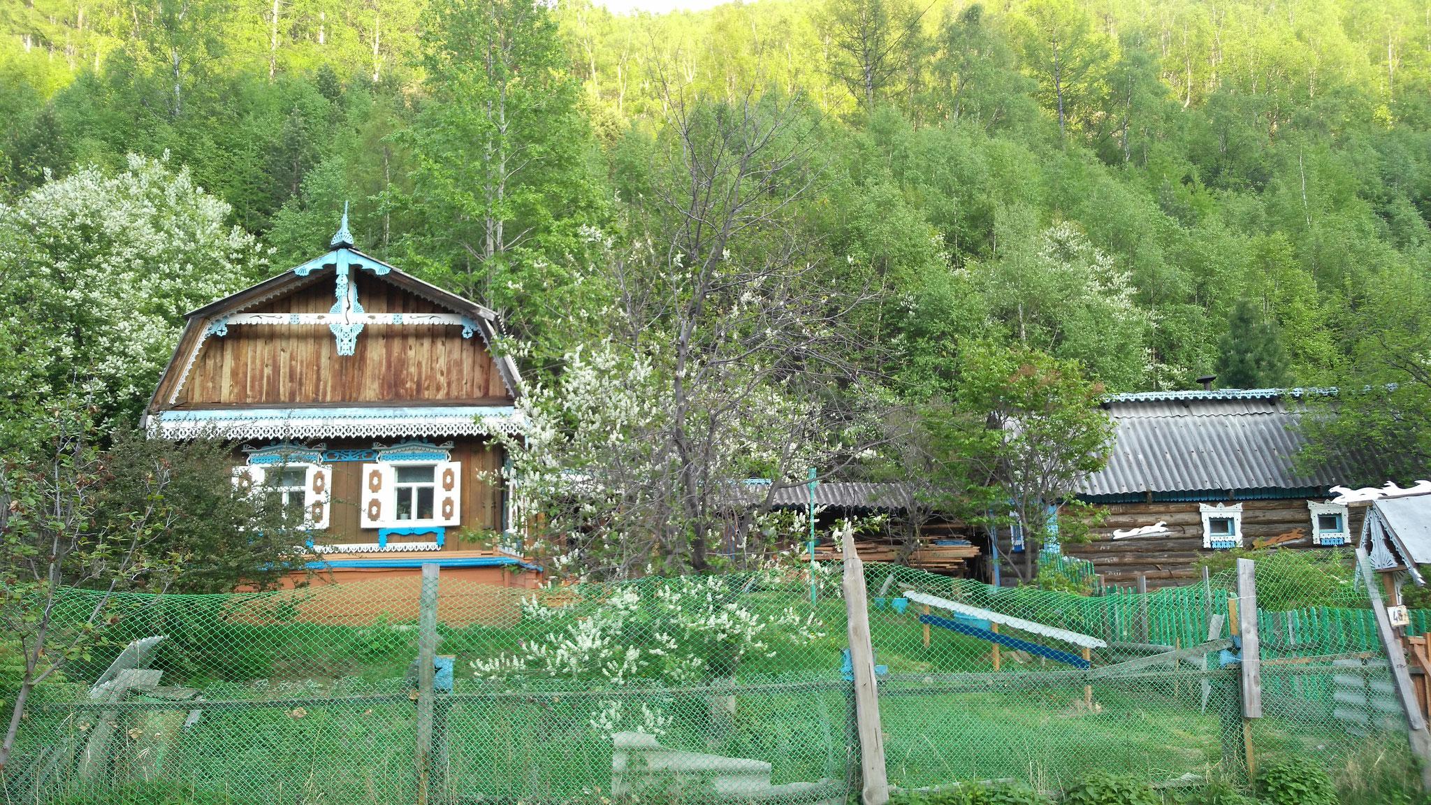 Dans les forêts de Sibérie (Russie)