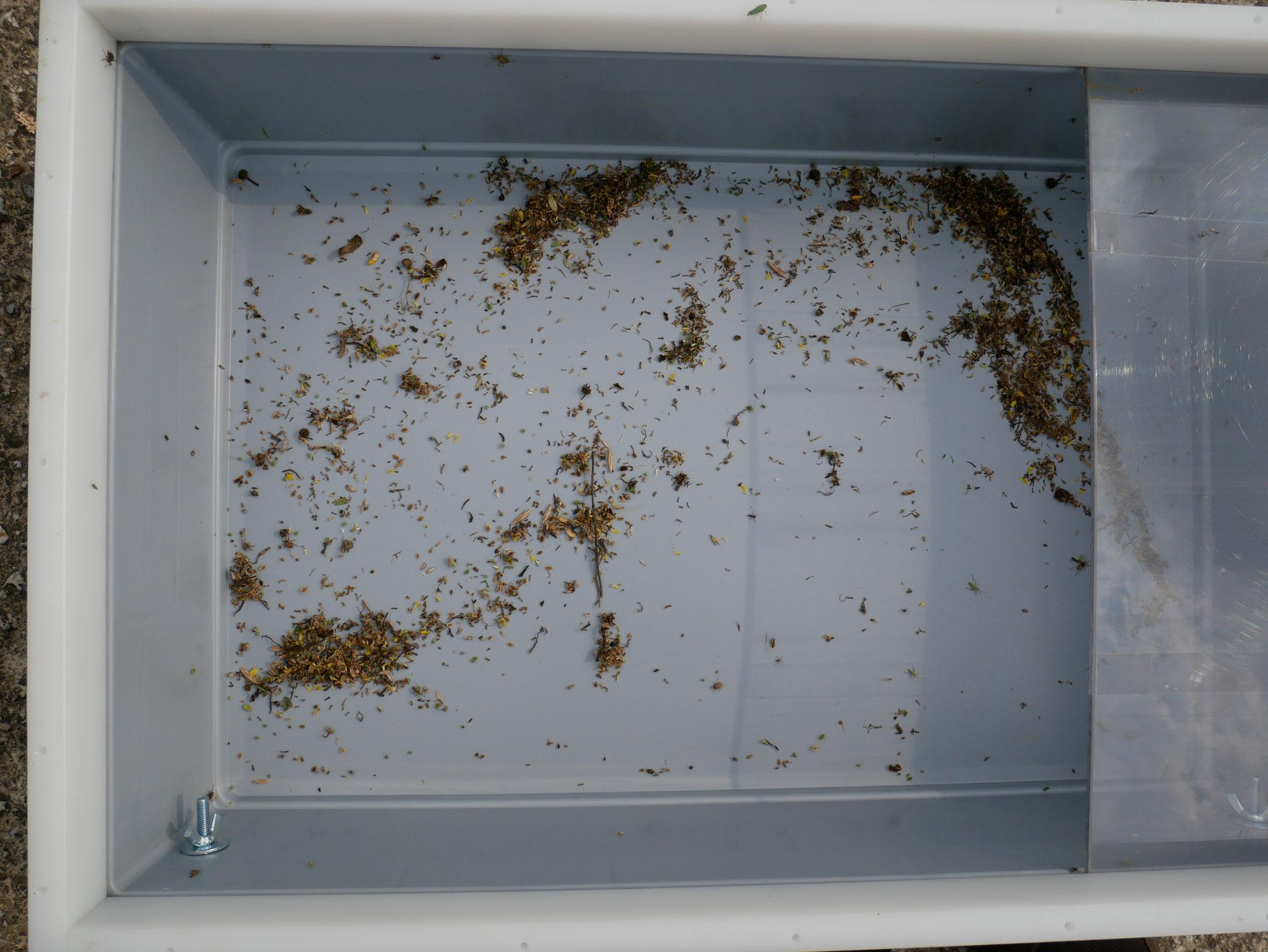 viele Sämereien und wo sind die Insekten?