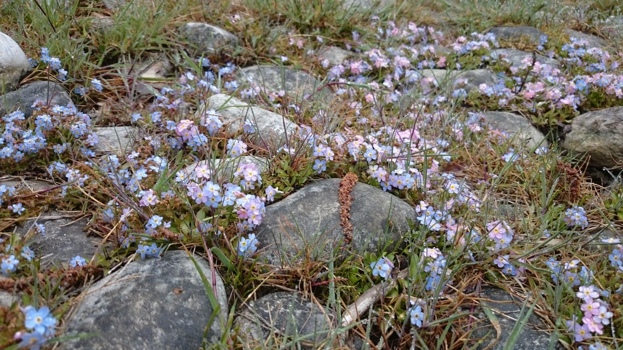 Blüten am Seeunfer