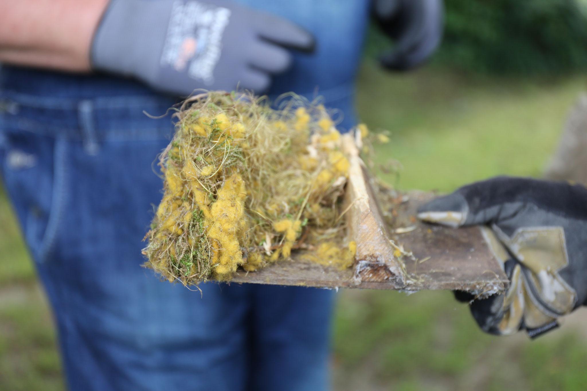 Leider werden auch zunehmend künstliche Materialien in Nester eingebaut.